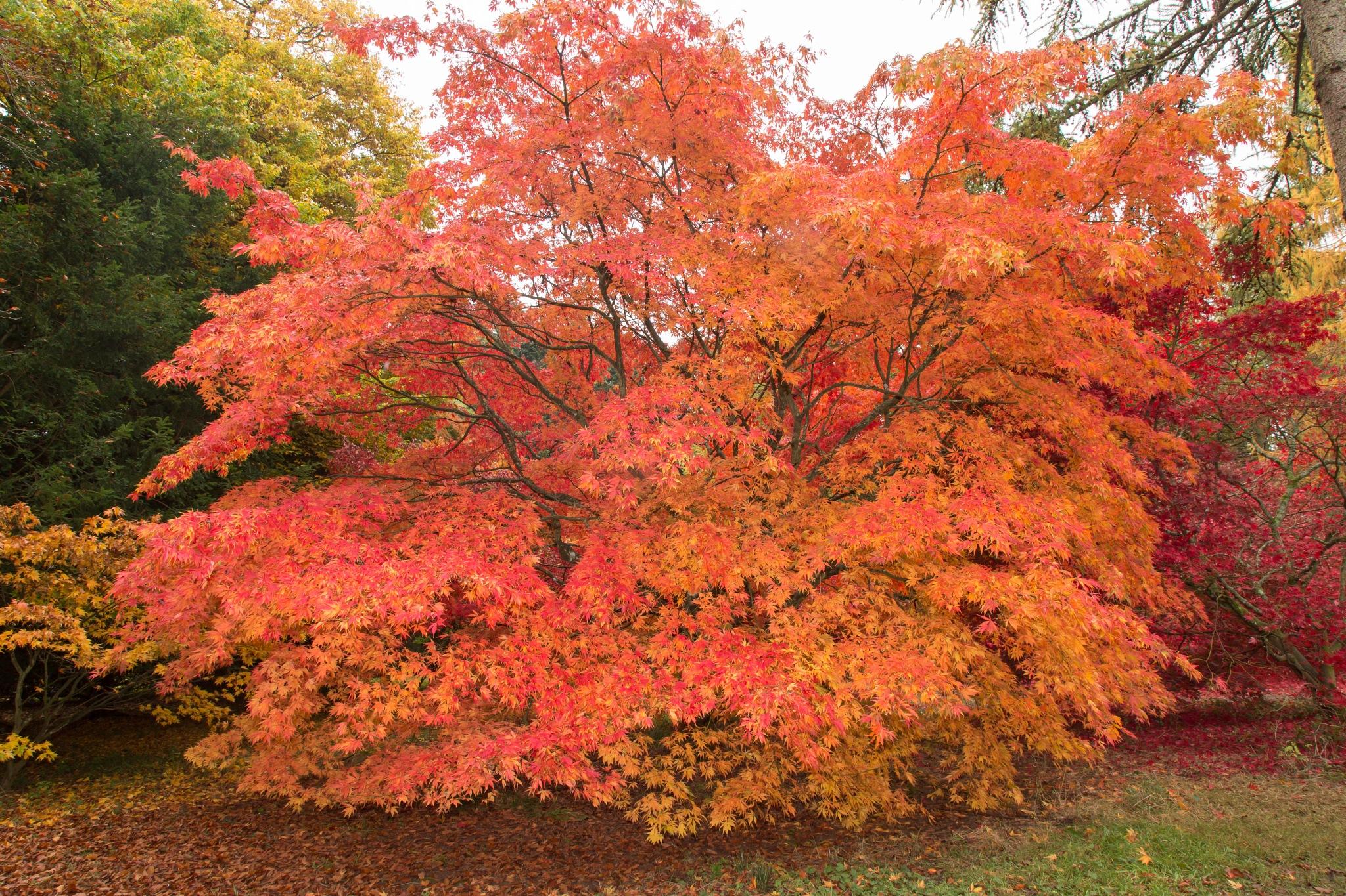 Autumn by Philip Cooper