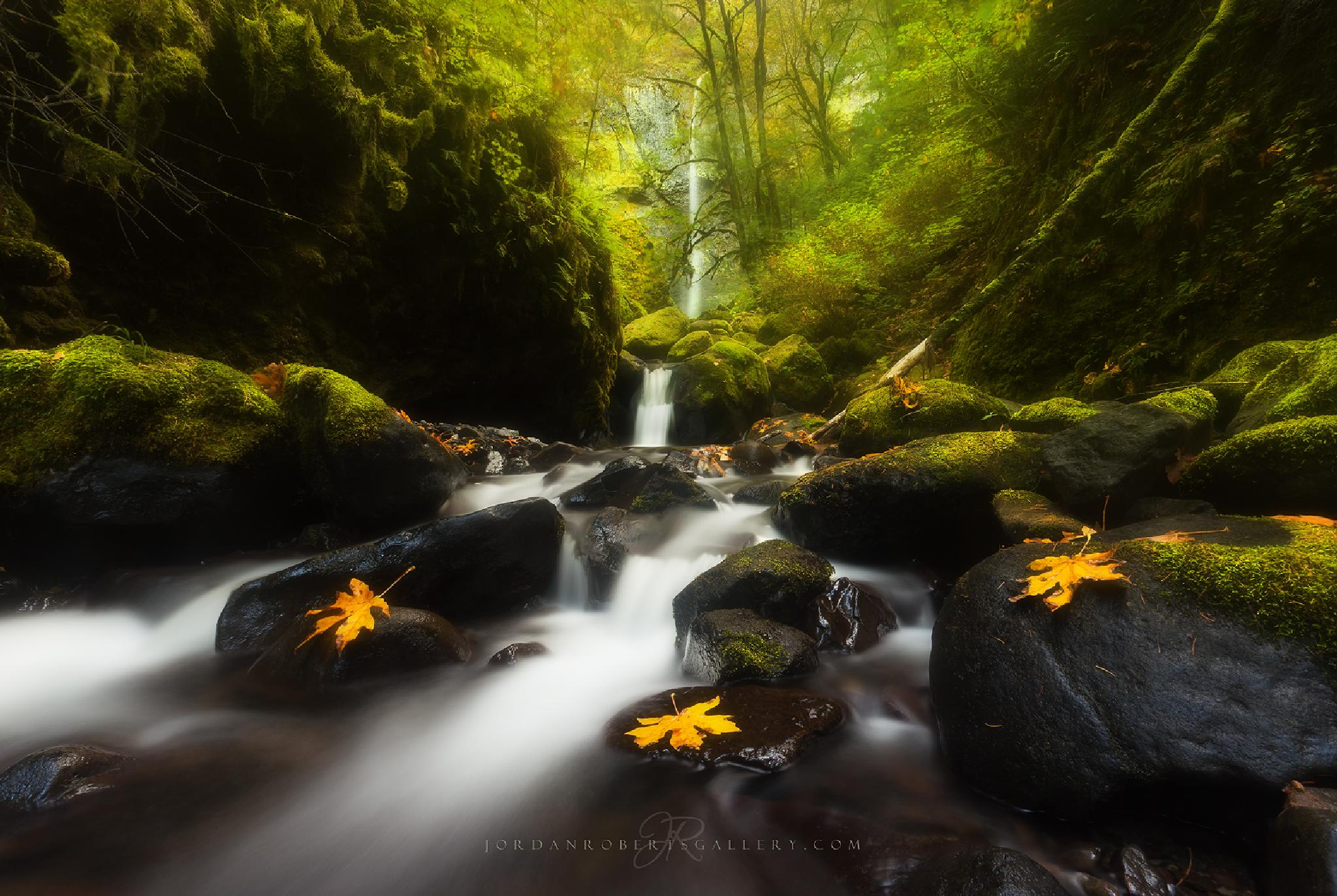 Autumn Dream by Jordan Roberts