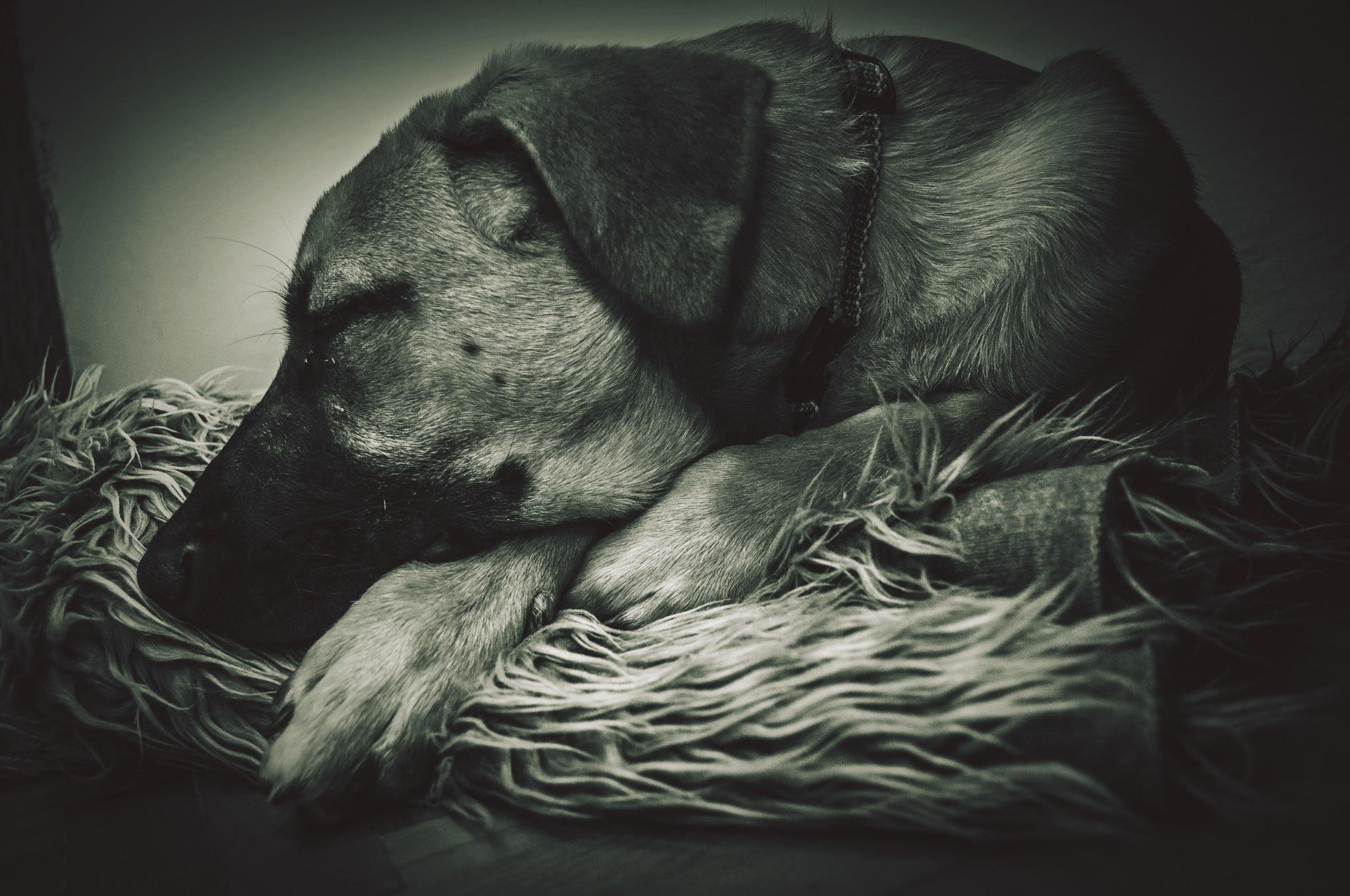 Dog friend:) by Rafał GIERCZAK  ©