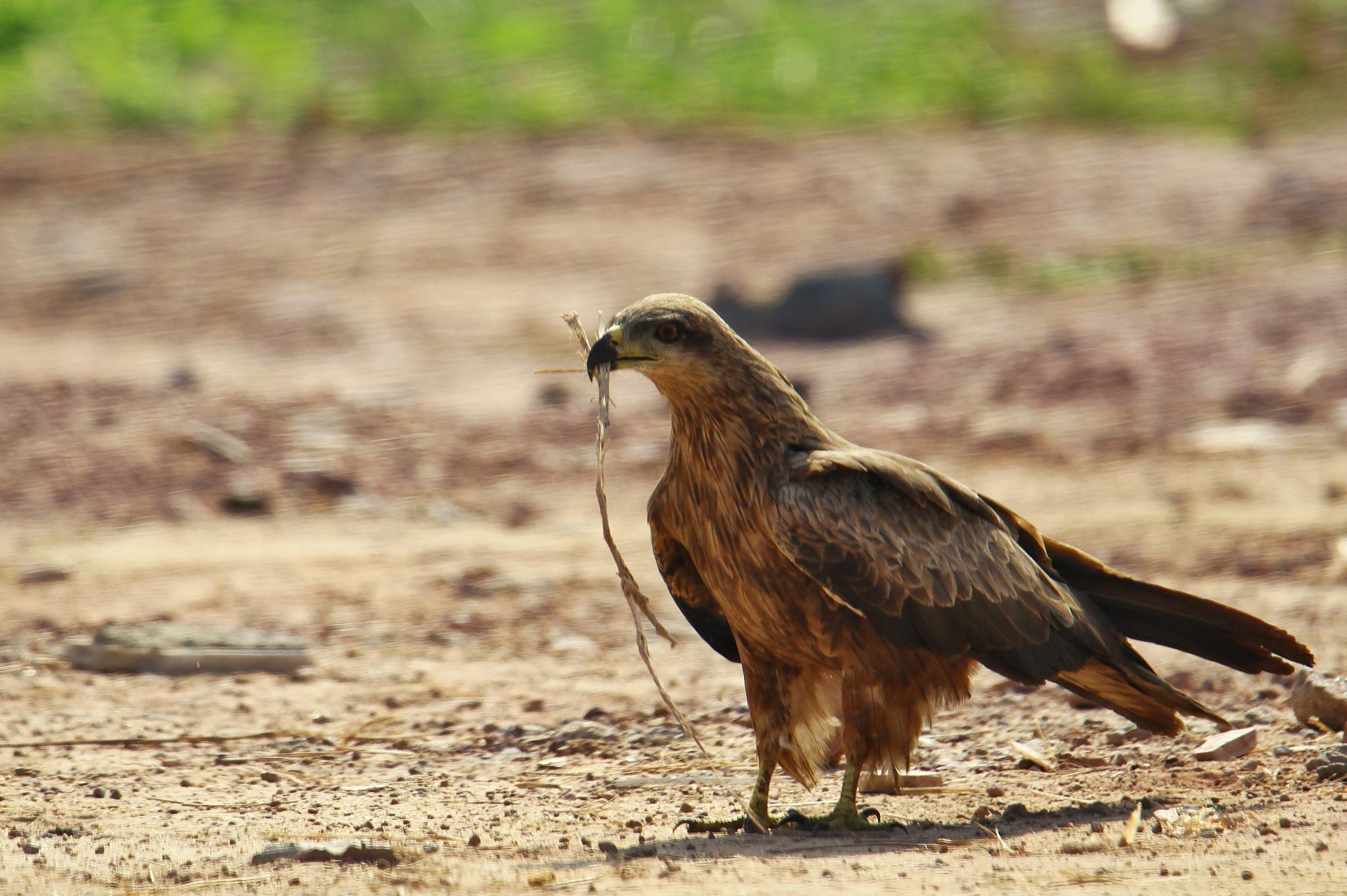 Photo in Random #nature #wildlife #birds #naturephotography #wildlife photography #birdphotography #photography