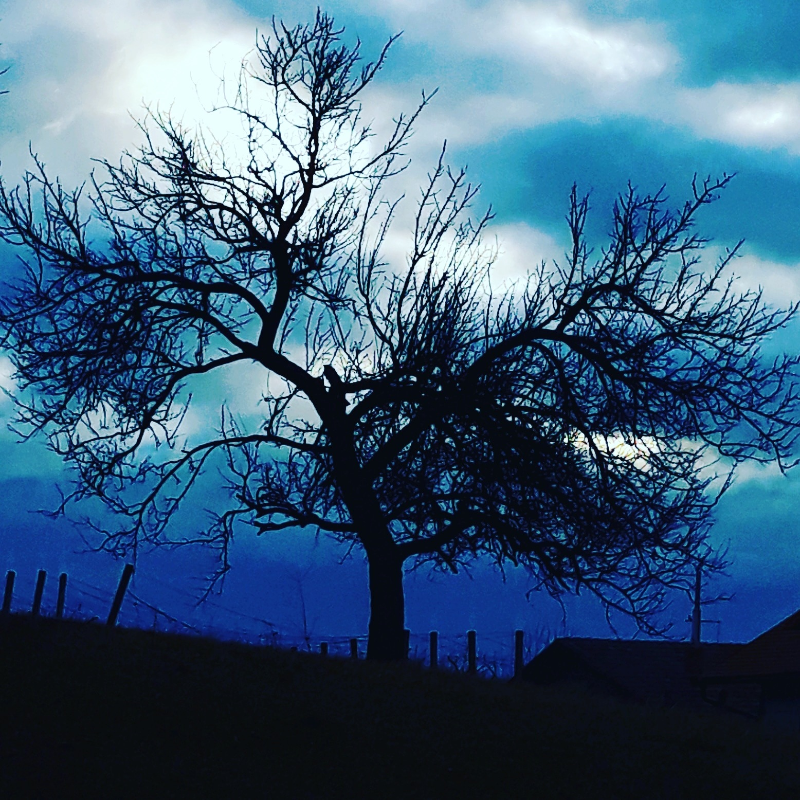 Photo in Random #tree #landscape #dawn #sunrise #branches