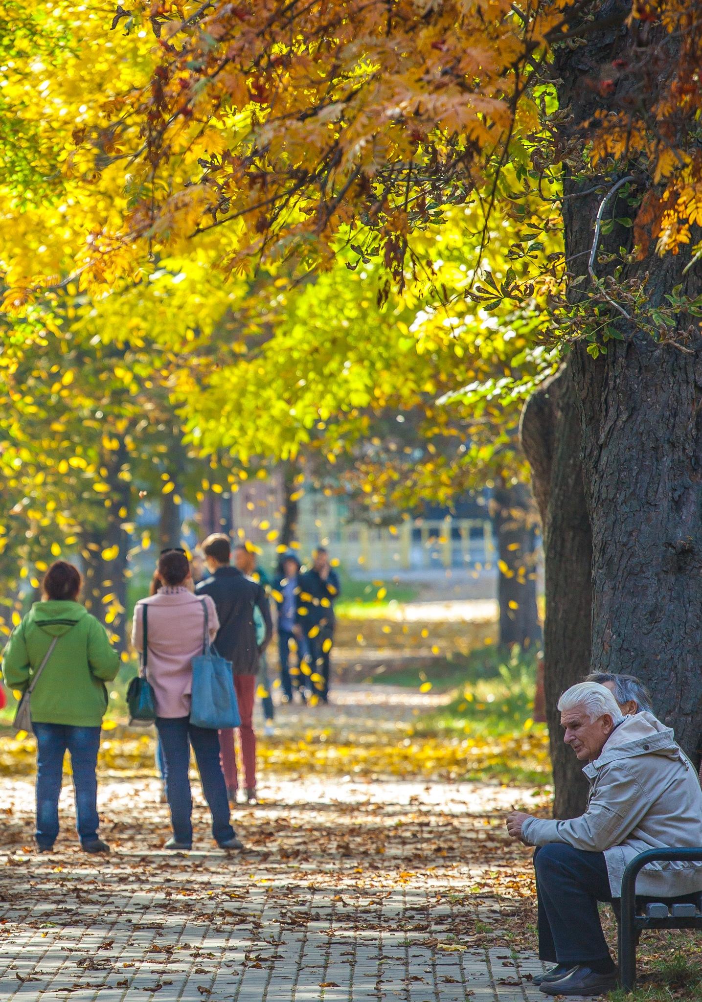 Golden autumn by Dennis Dik