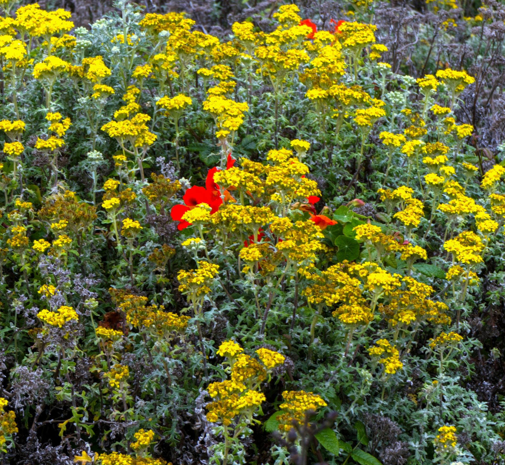 Coastal Wildflowers by Michael Sheltzer