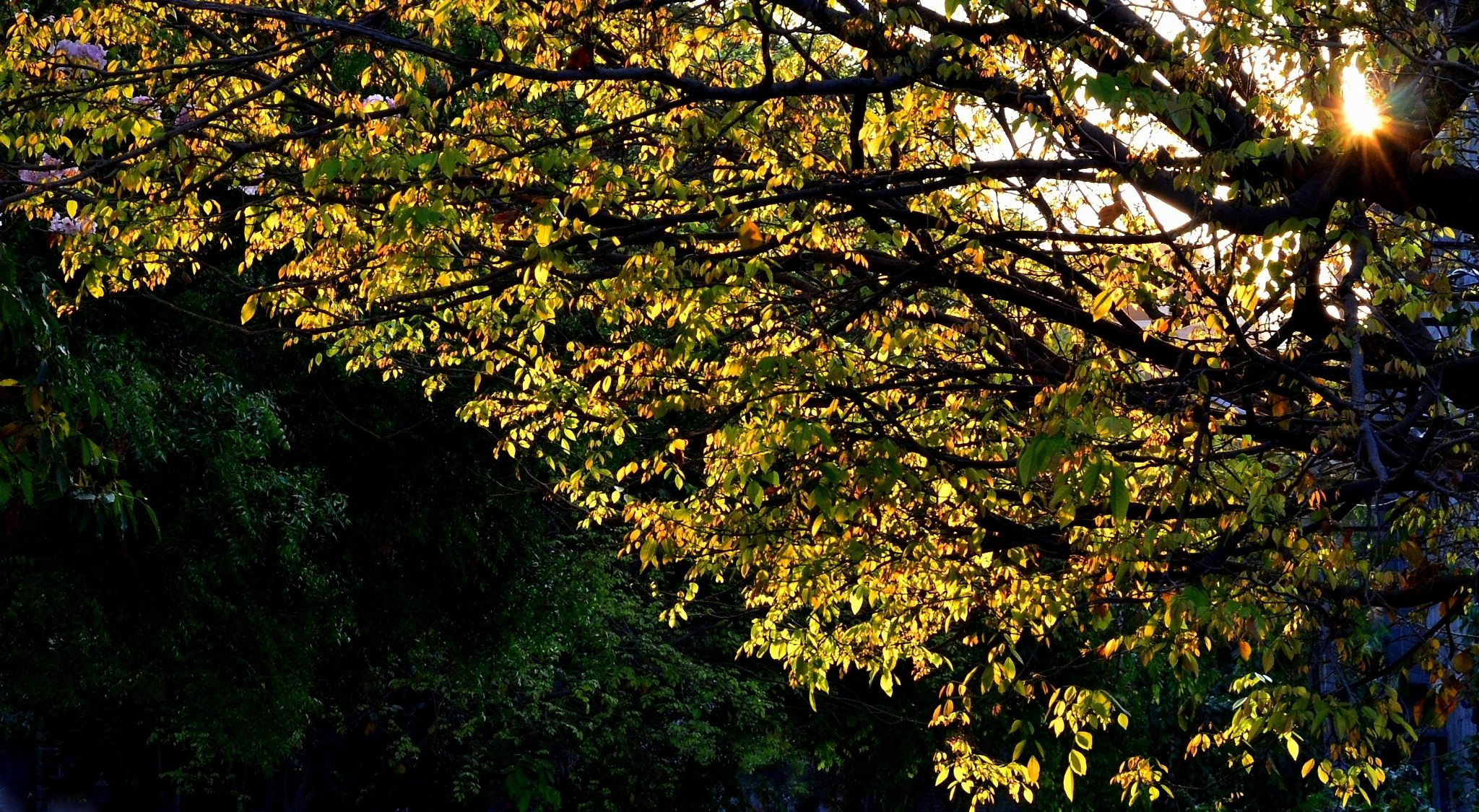Spring & Sun... by sriramshankars