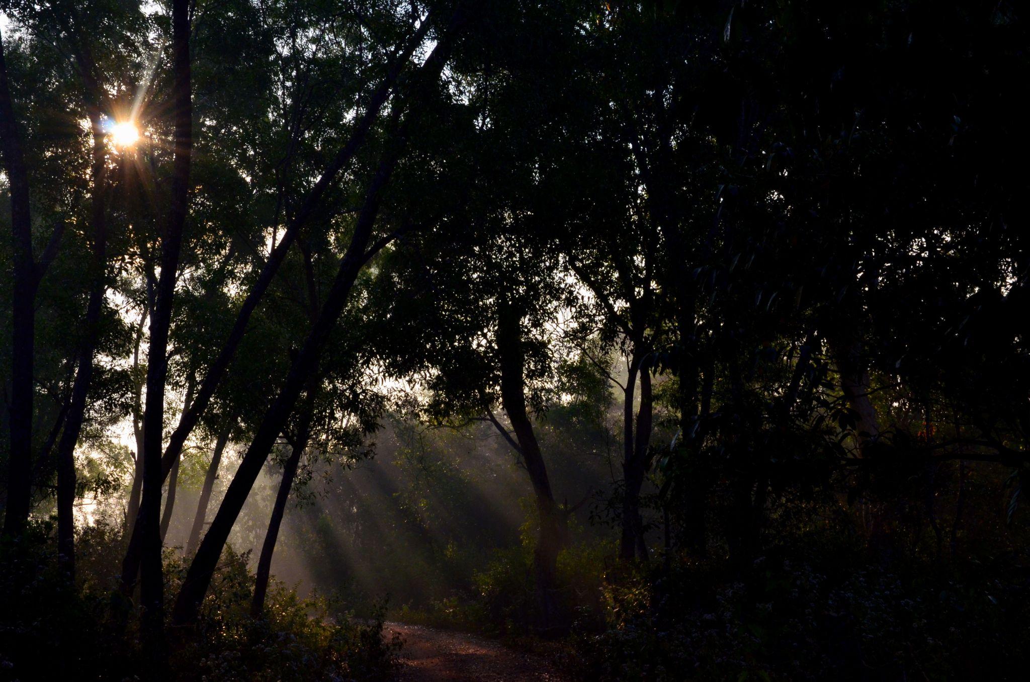 Rays of Hope... by sriramshankars