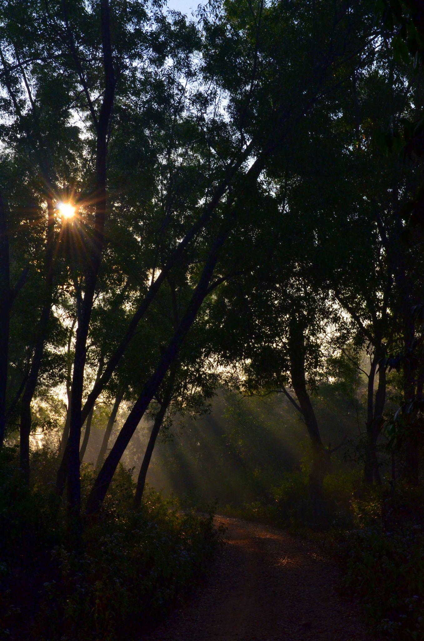 Play of light... by sriramshankars