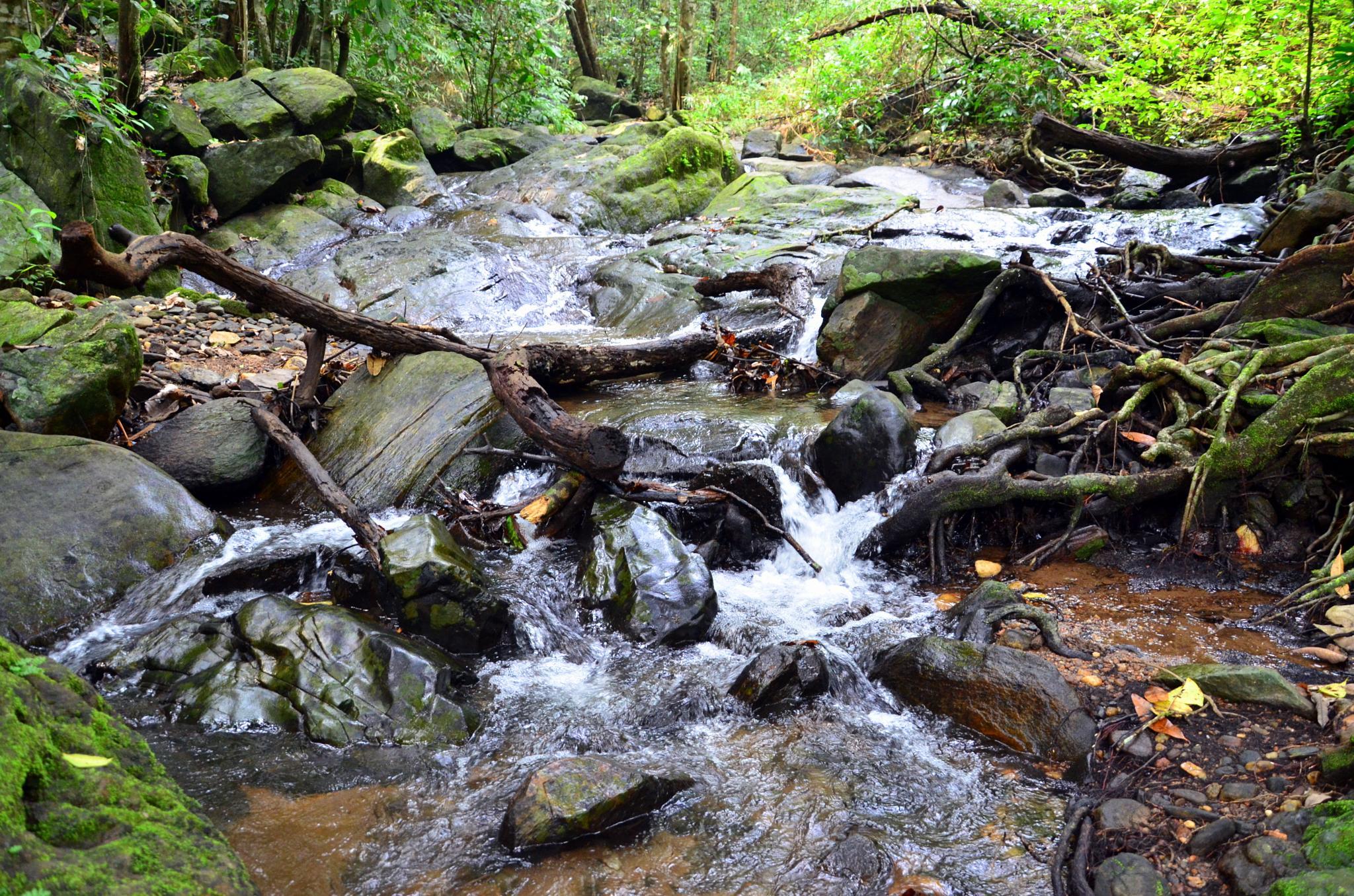 Stream in the Rain Forest... by sriramshankars