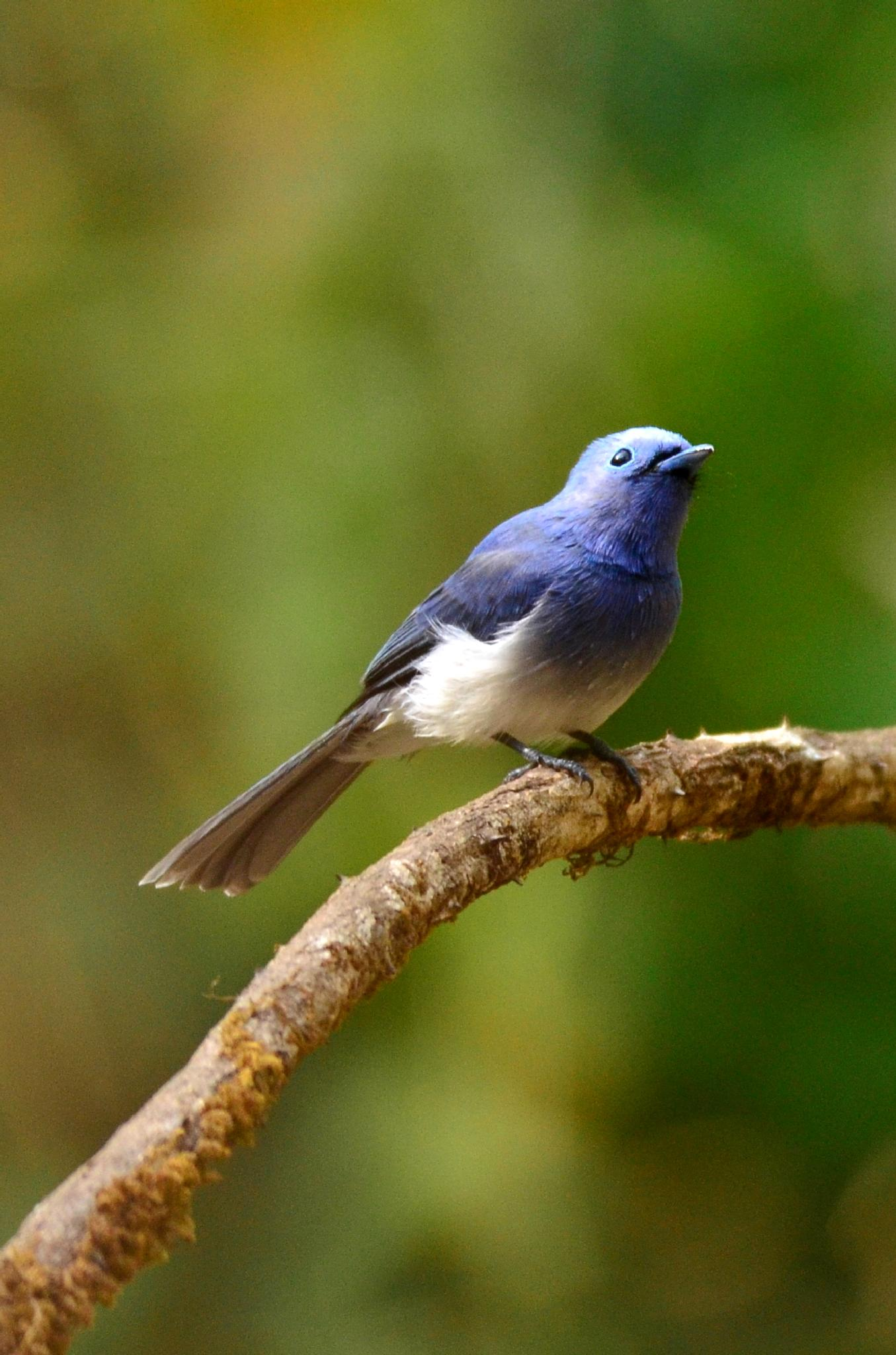 Cutest little bird... by sriramshankars