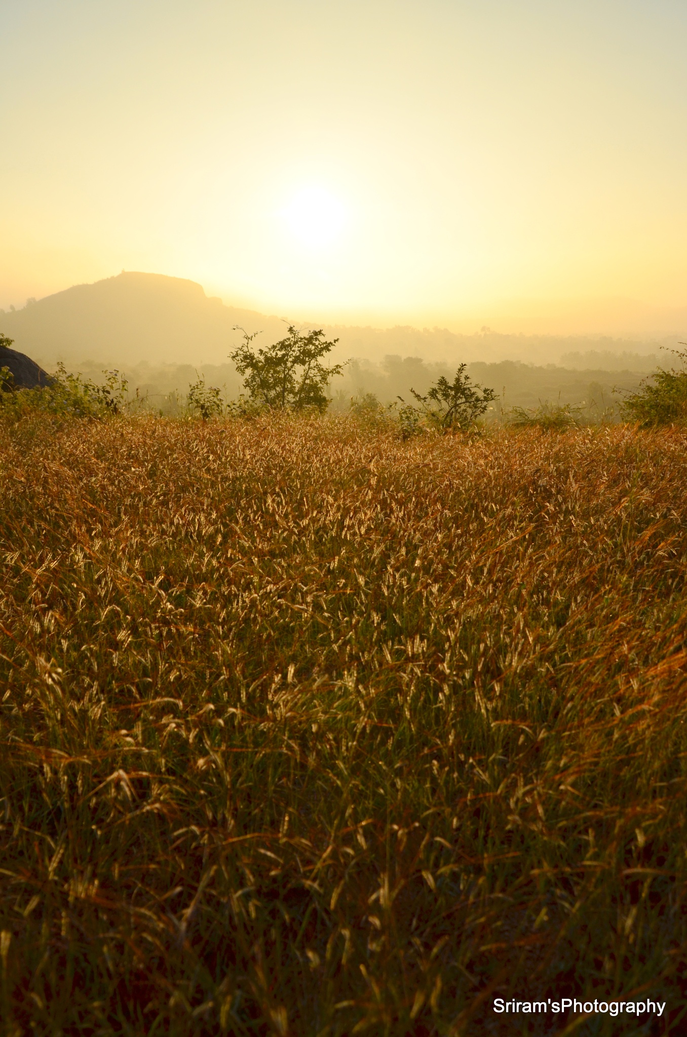 Wild and shining at Sunrise... by sriramshankars