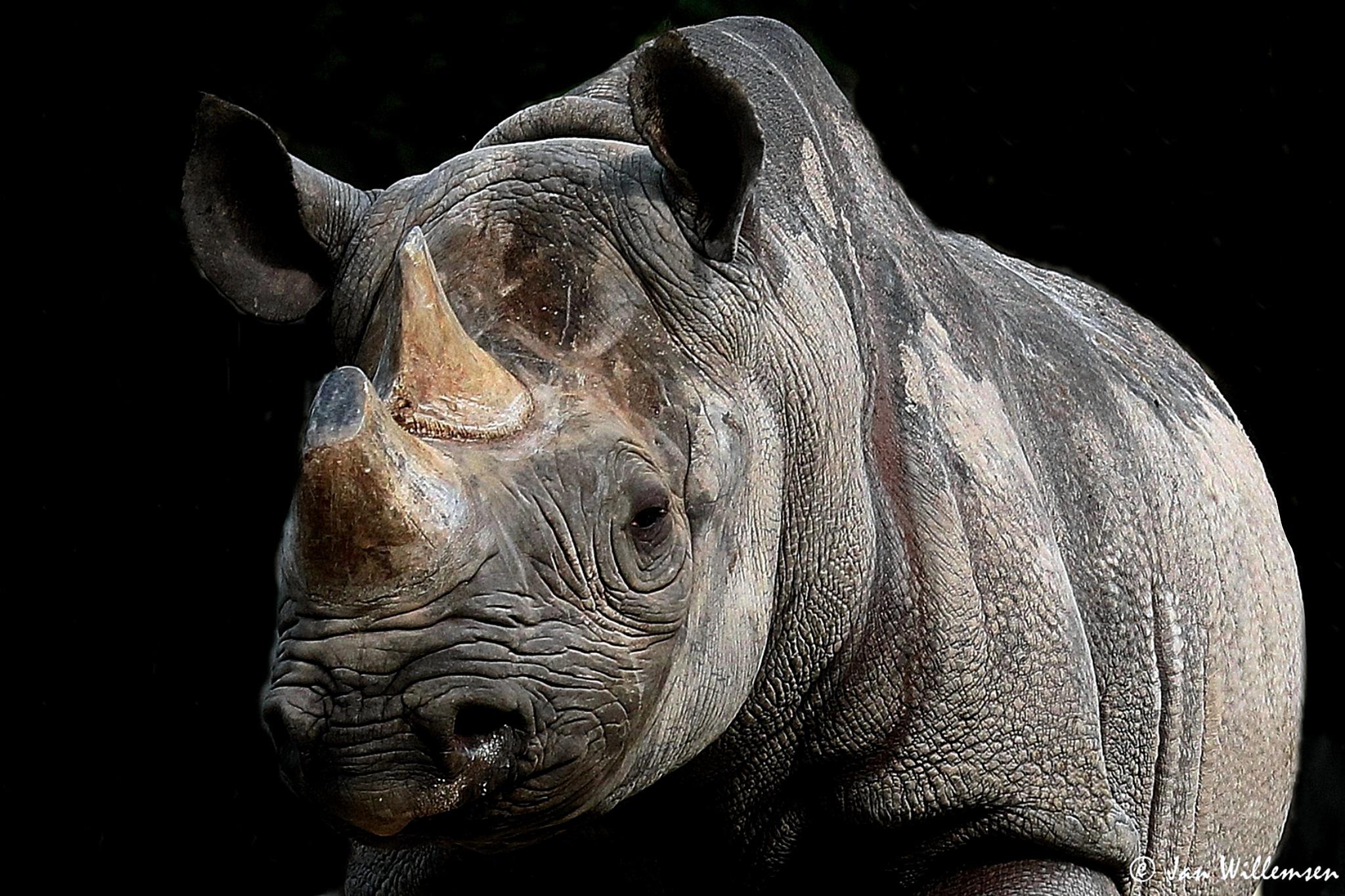 Black Rhino by Jan Willemsen Fotografie