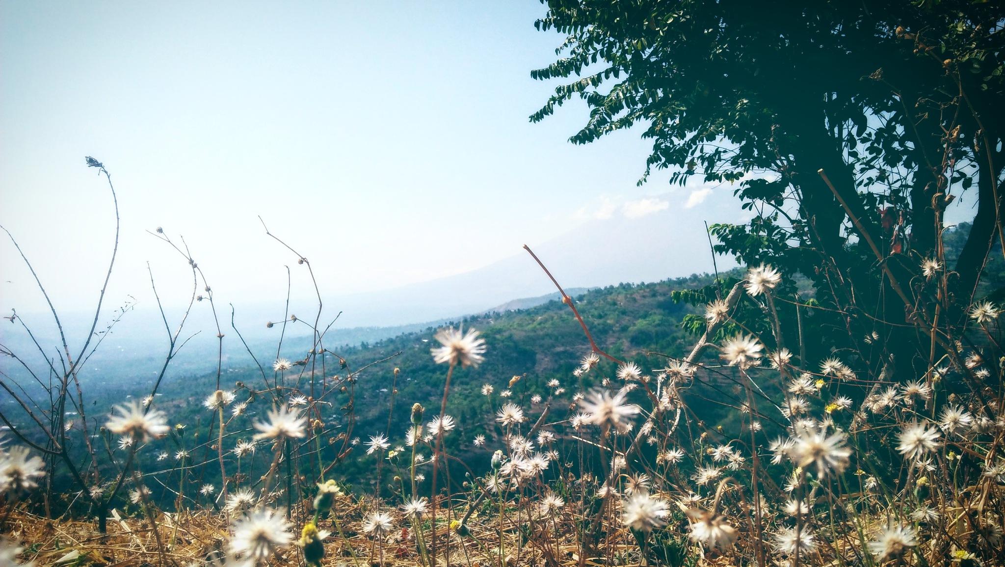 Flowers by Ayu Wiranti