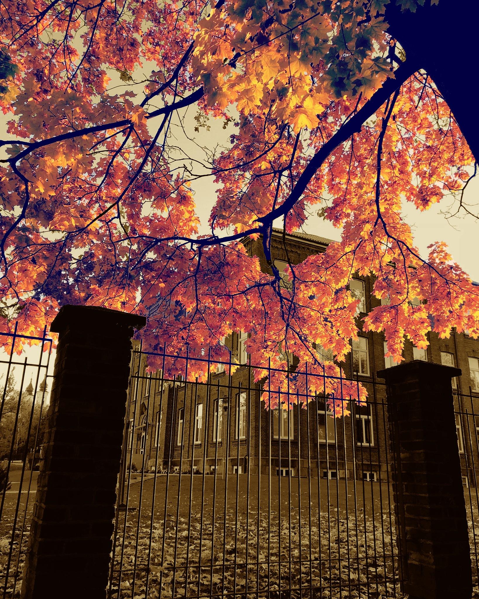 October by Edmundas Laukaitis