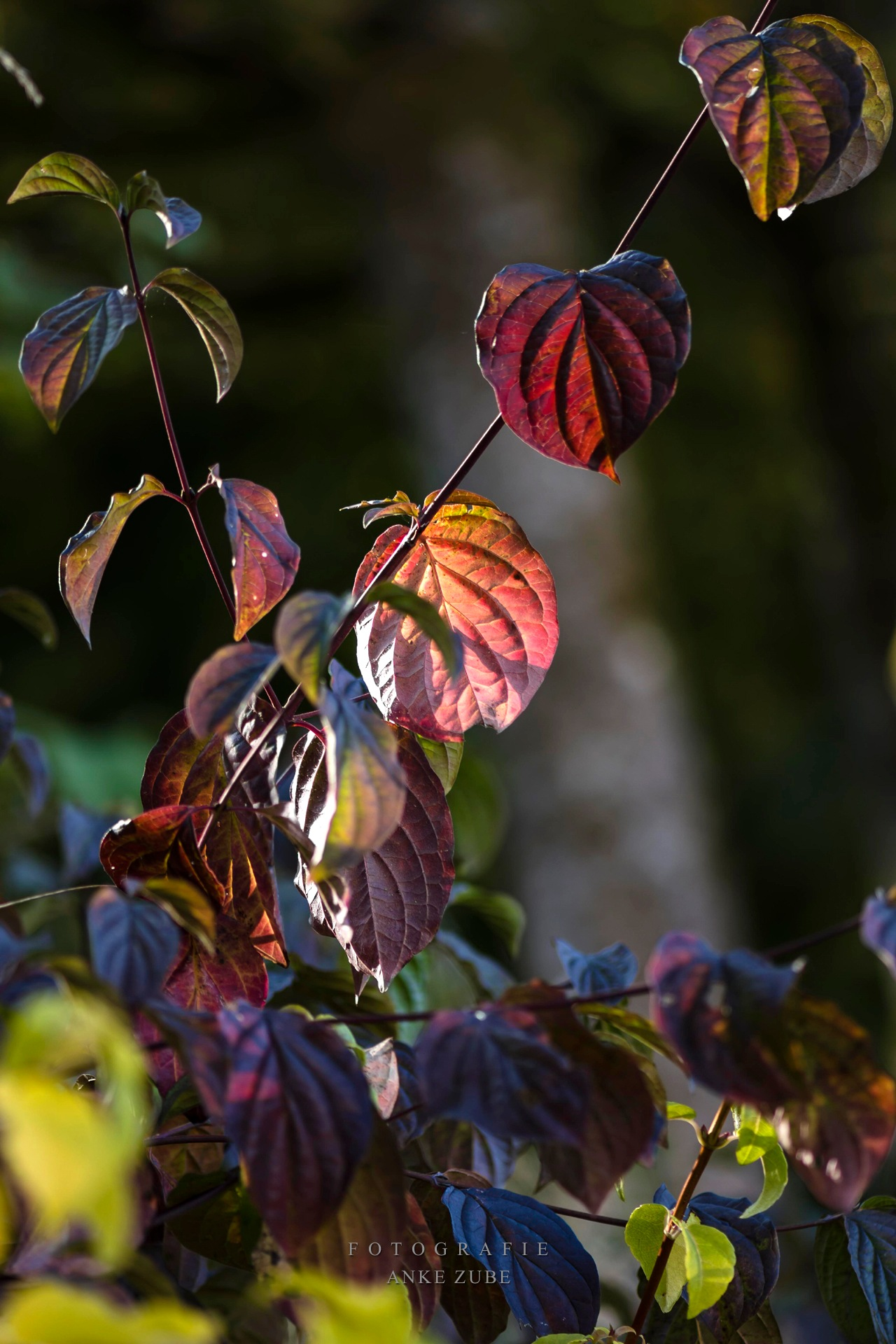 Autumn leaves in the sunlight by Anke Zube