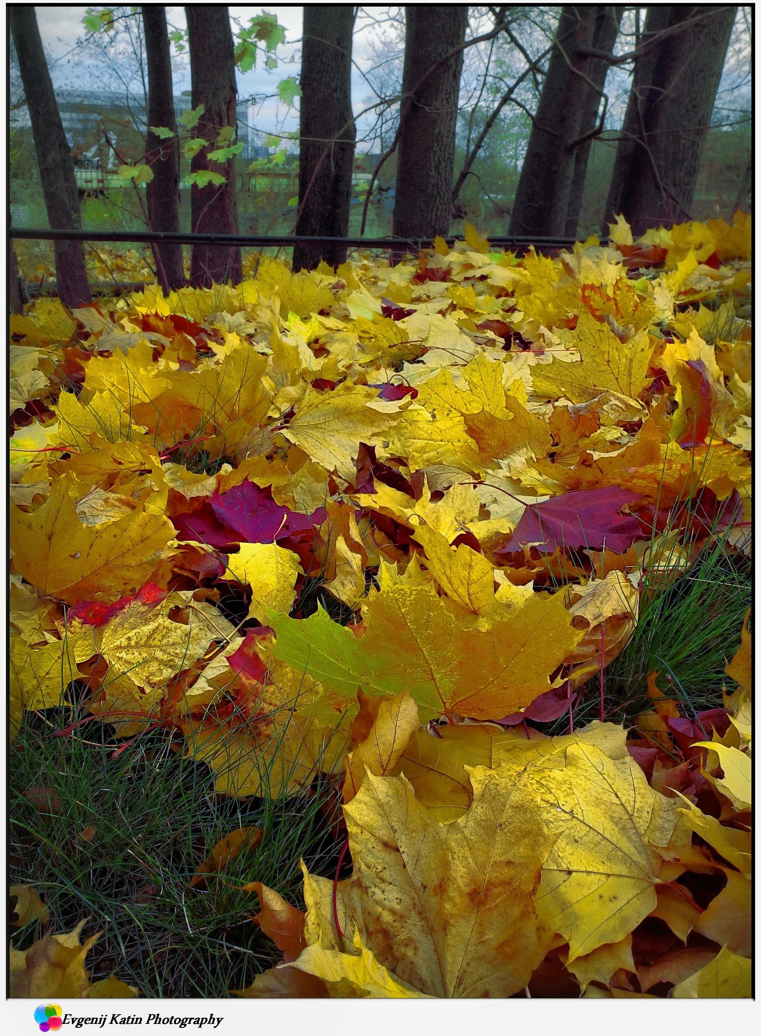 Autumn flush by Evgenij Katin