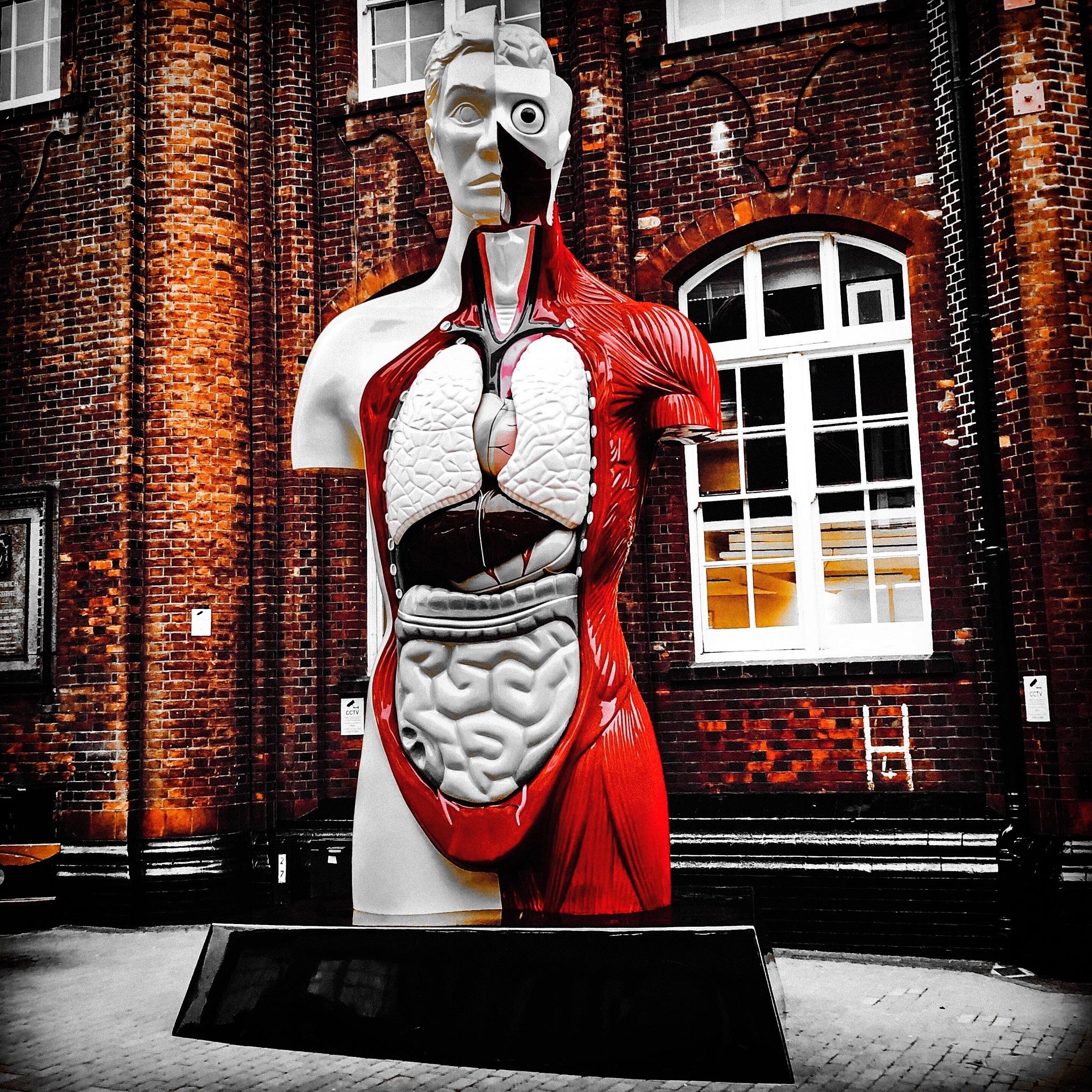 Damien Hirst installation  by Dylan Mccarthy
