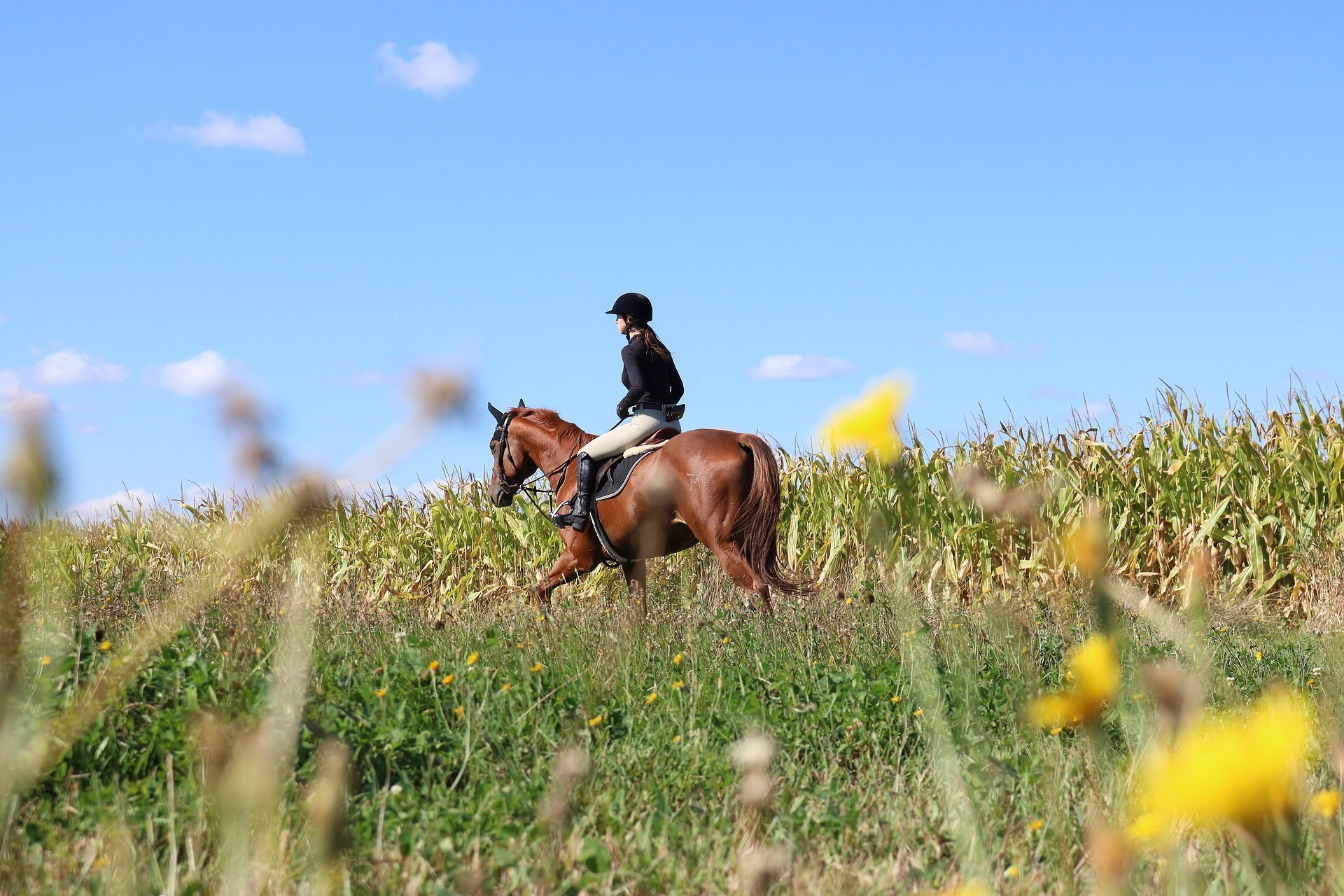 Horseback Riding by Chris HorizonRide
