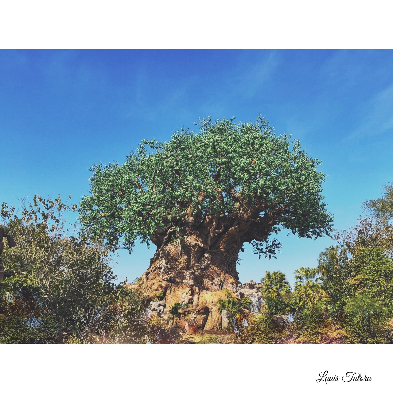 Tree of Life  by Louis Totoro