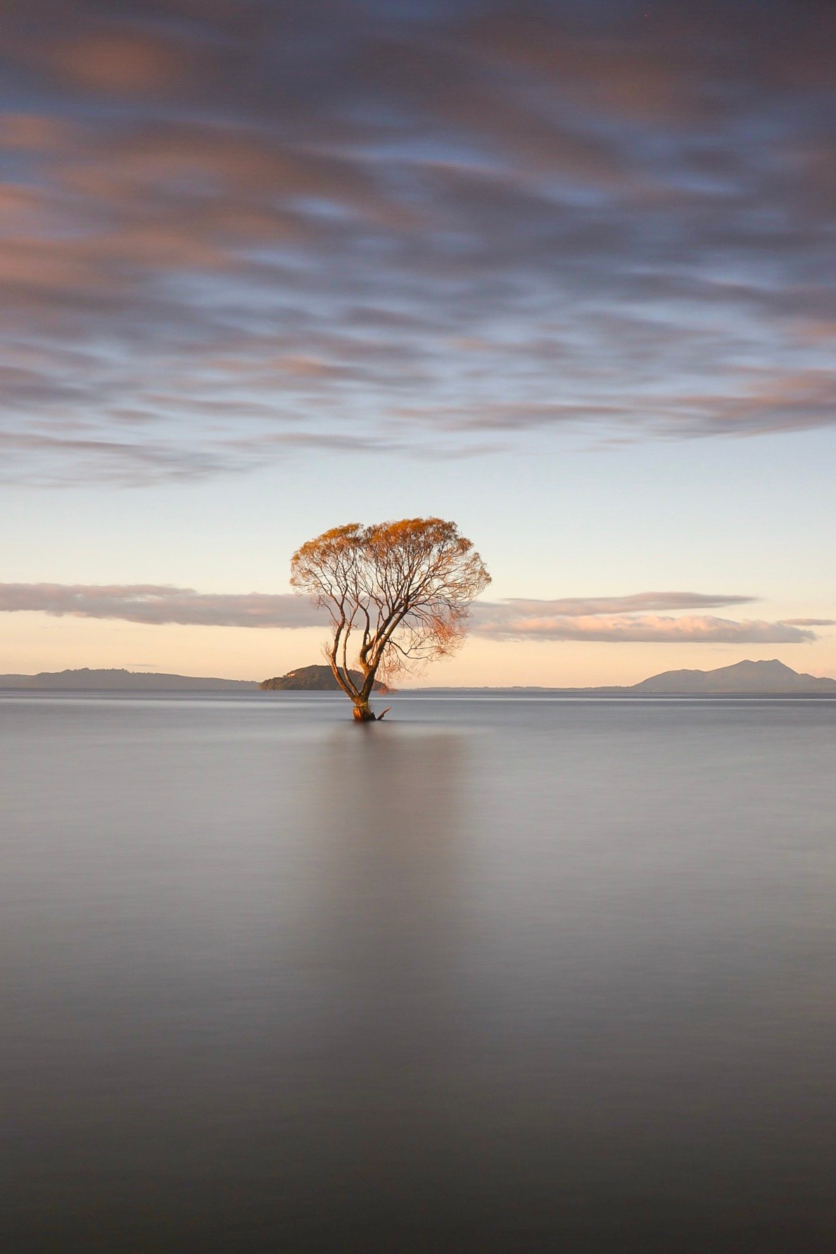 The lonely tree by Colin Sherman