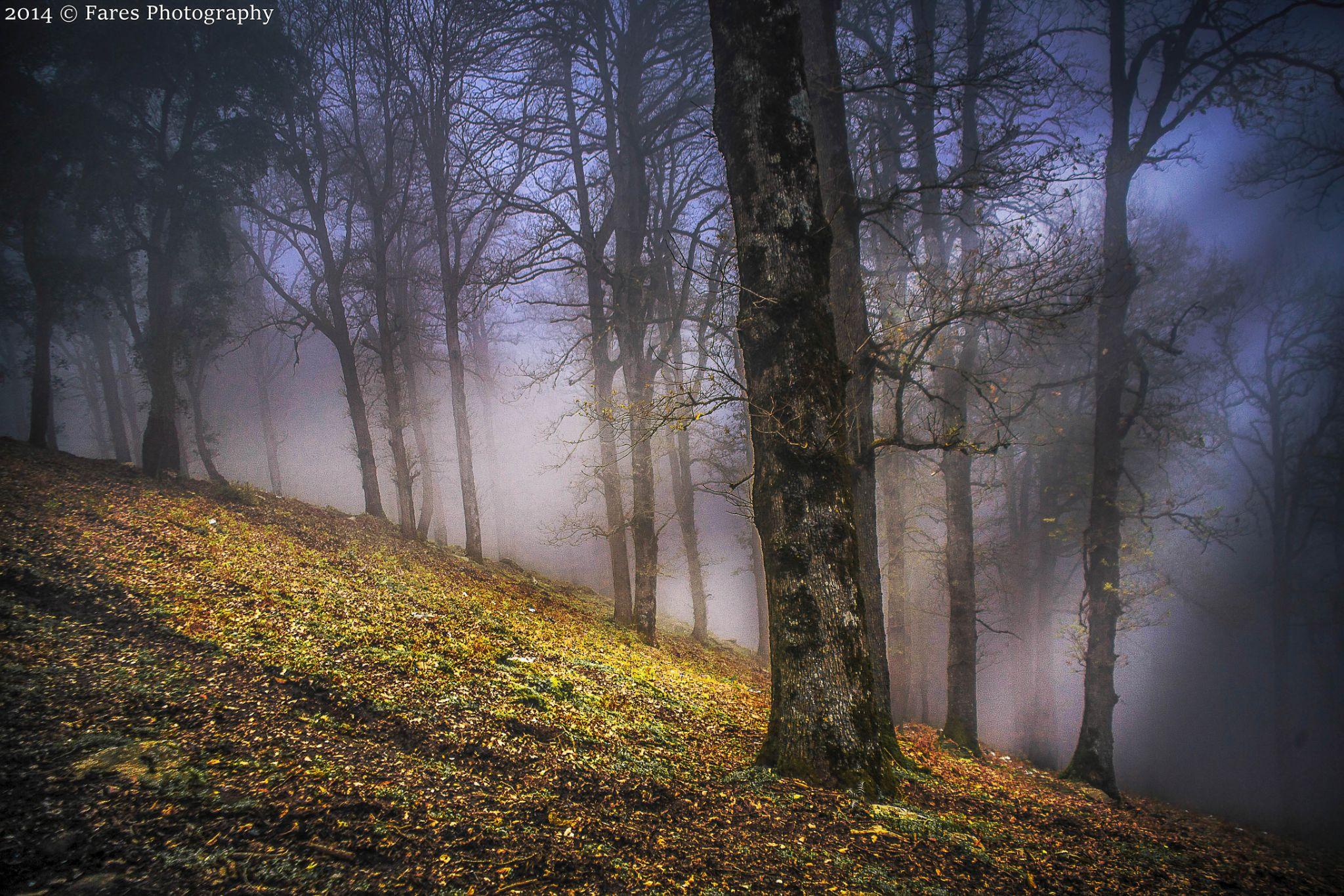 Brouillard  by Fares Annaba