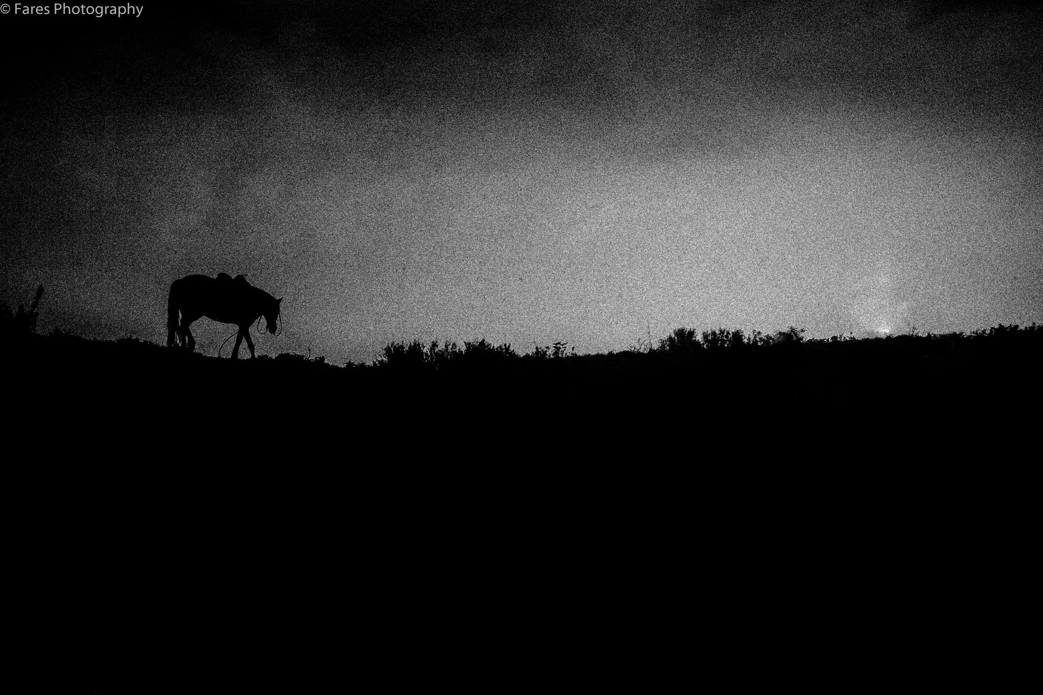 horse  by Fares Annaba