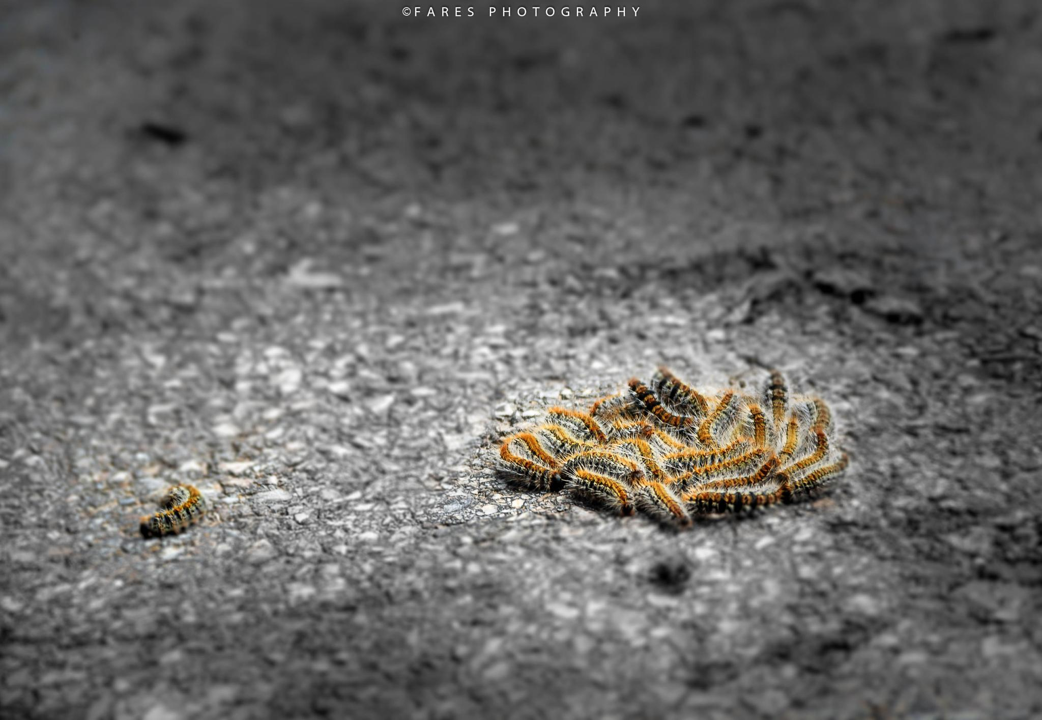 lonely worm by Fares Annaba