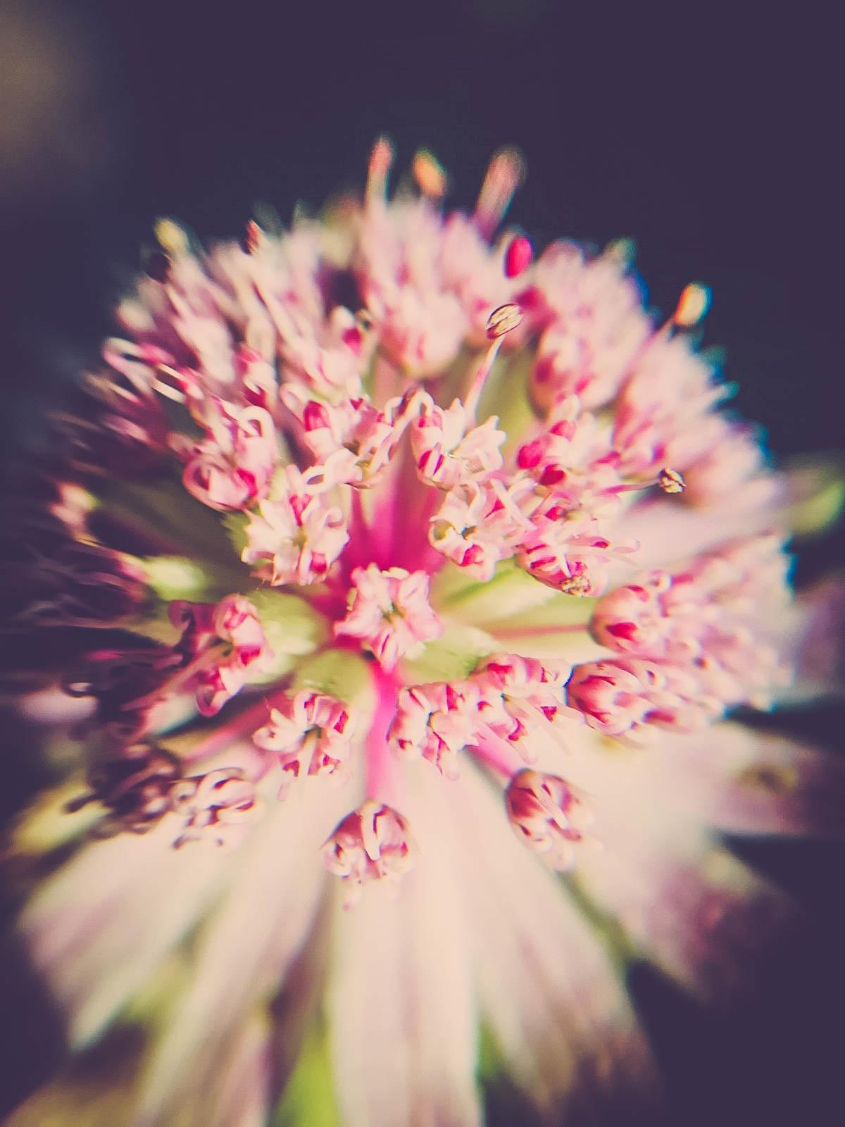 Autumn Bouquet by antonia kofod