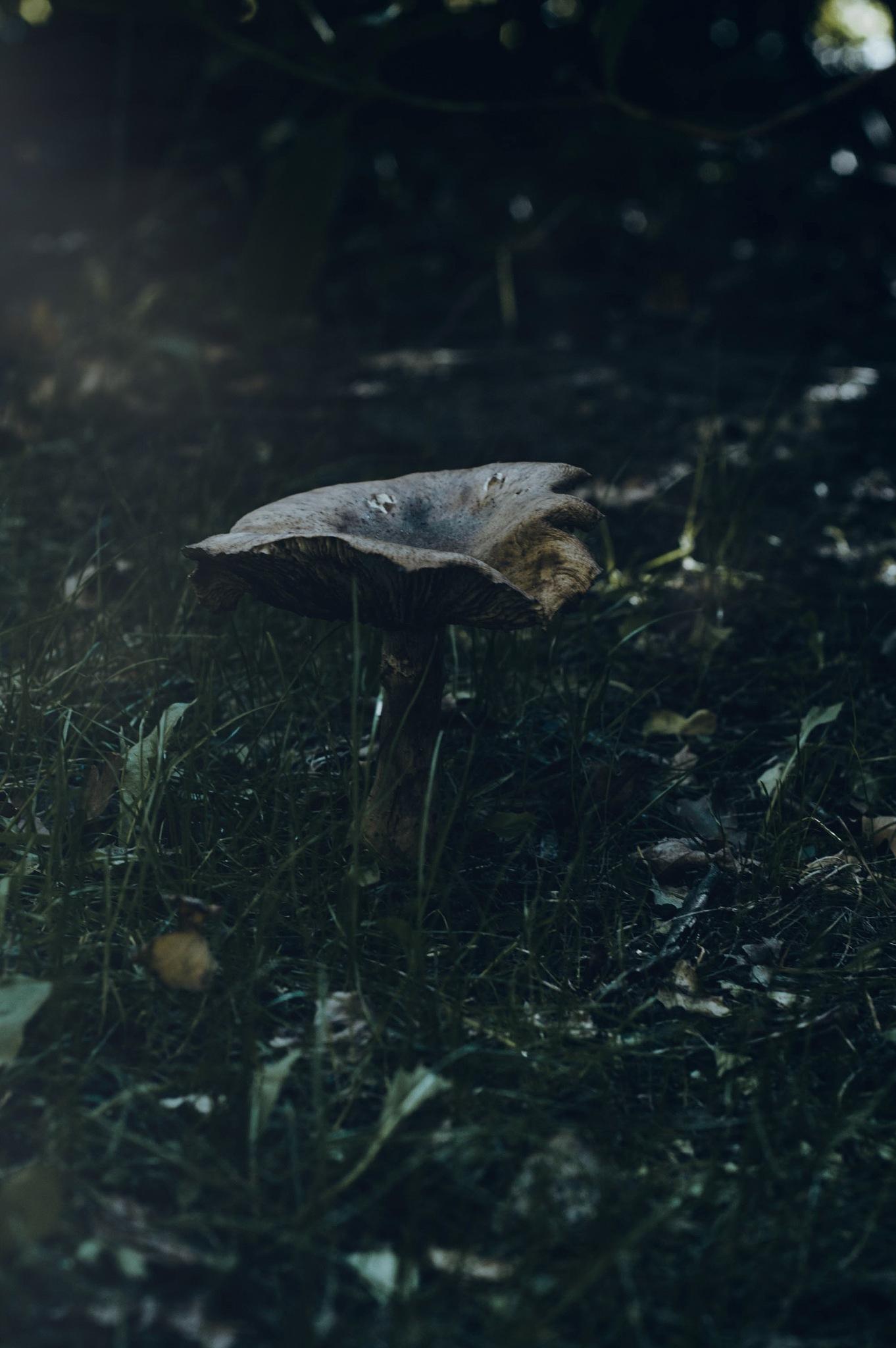 Saffron Milk Cap in a hazy dusk by antonia kofod