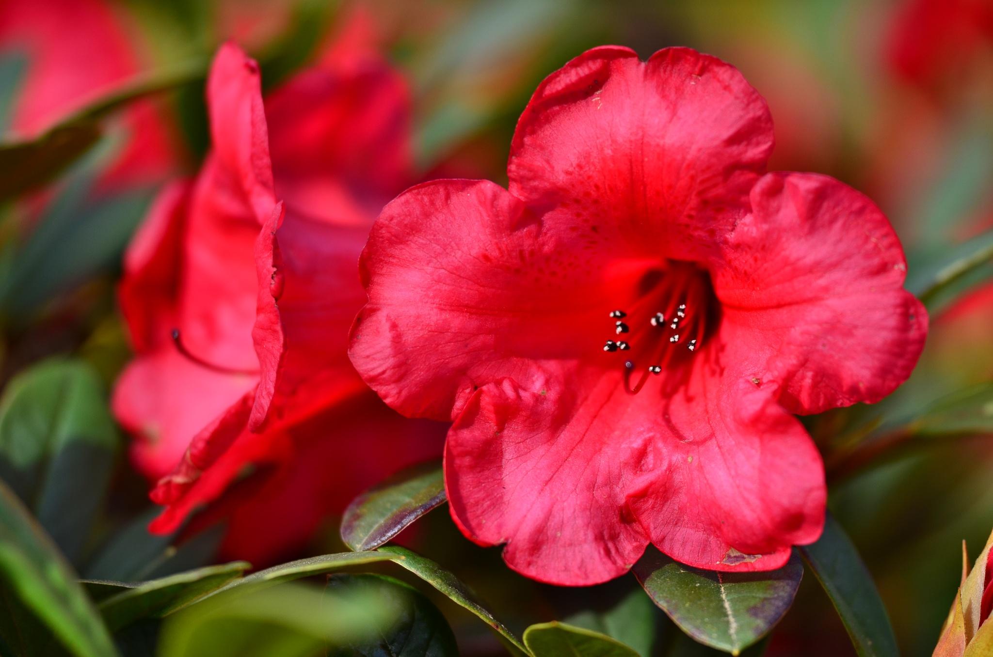 Red by Pat JM Paulus