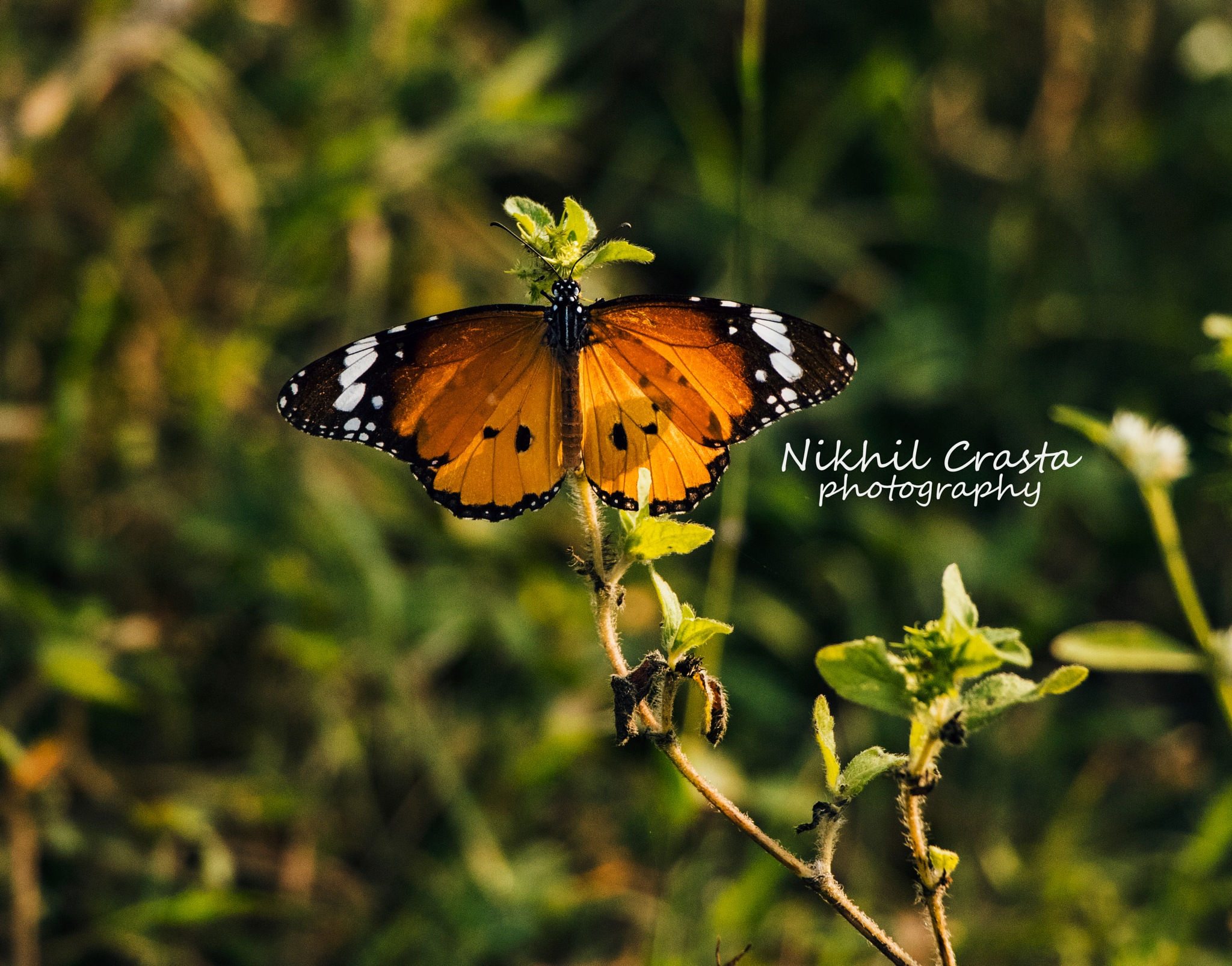 Spread those wings and fly  by Nikhil Crasta Photography