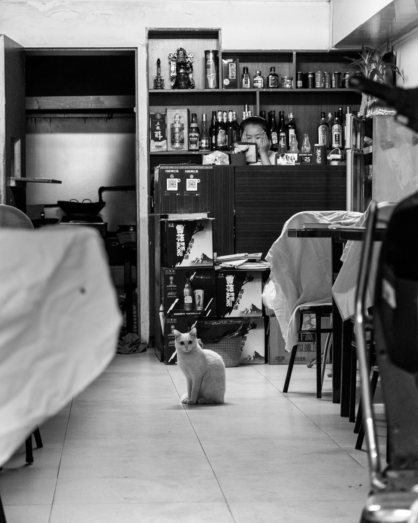 Cat in a restaurant by Brook Ince