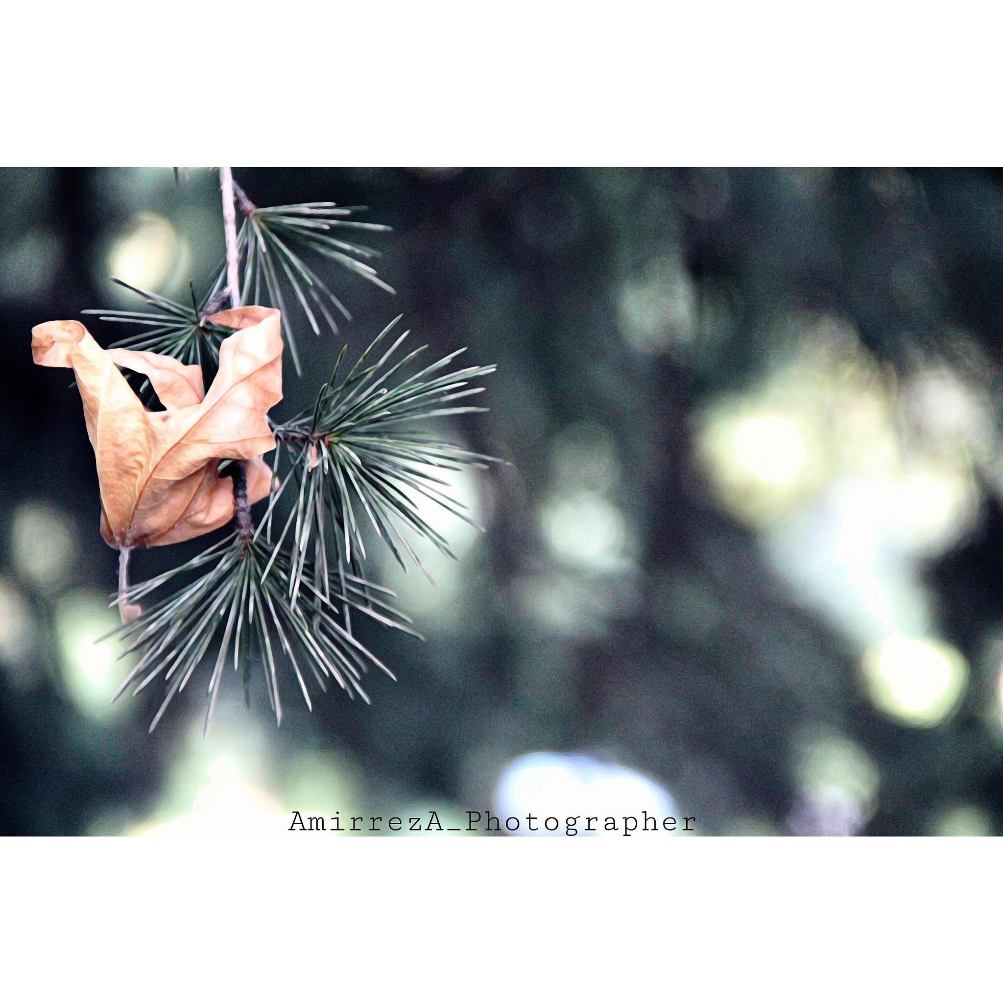 Untitled by Amirreza_Photographer