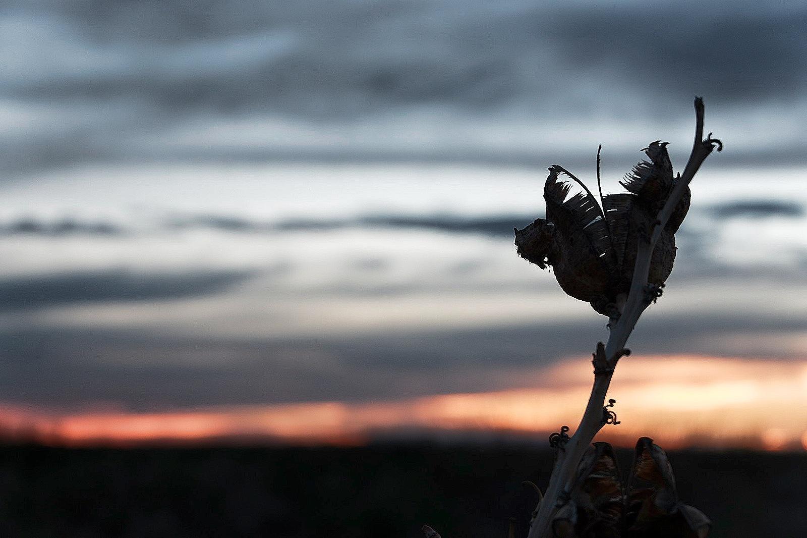 soft sky by Bryan Inostroza