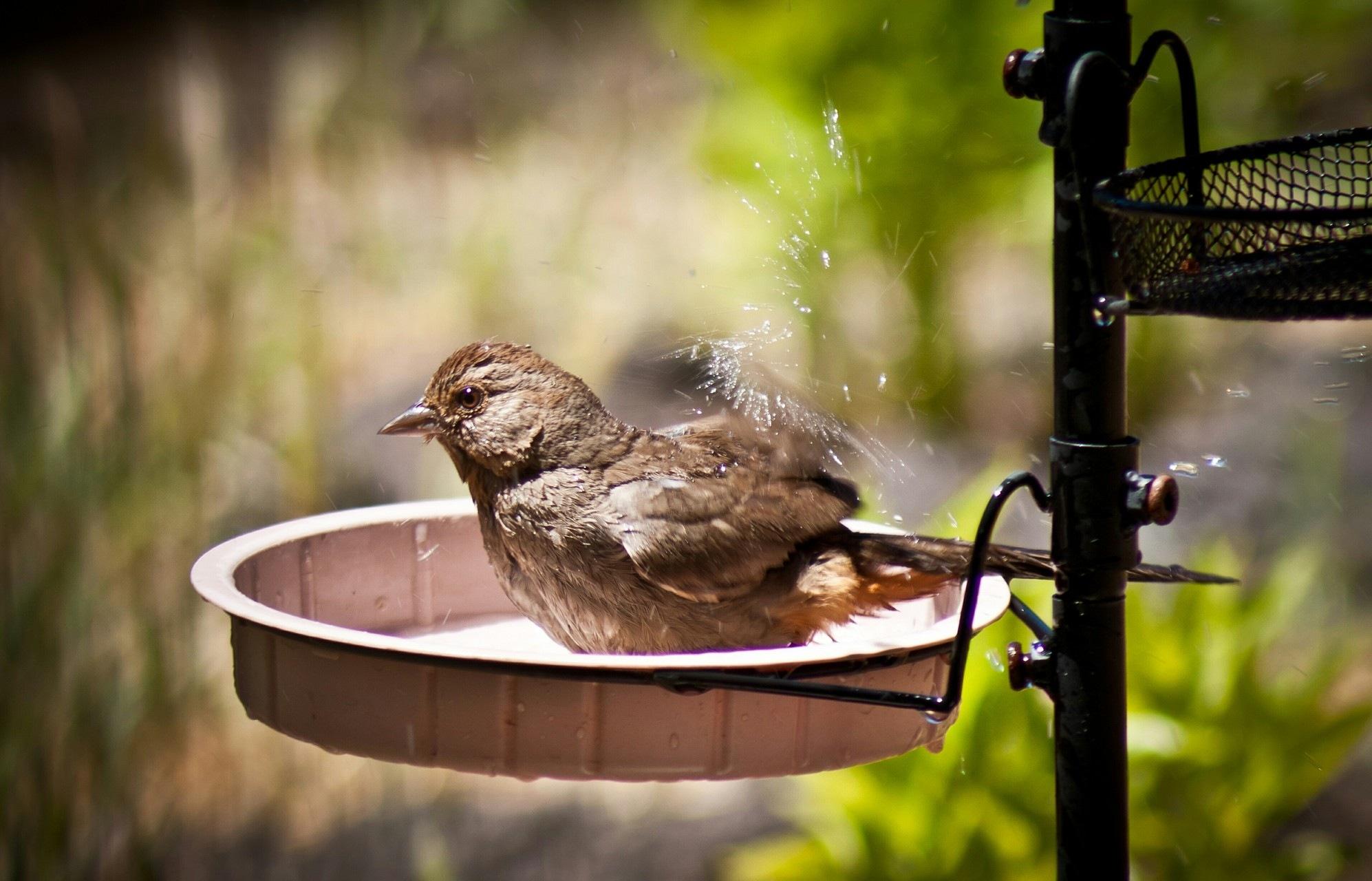 Birds Bath by Divyesh Parate