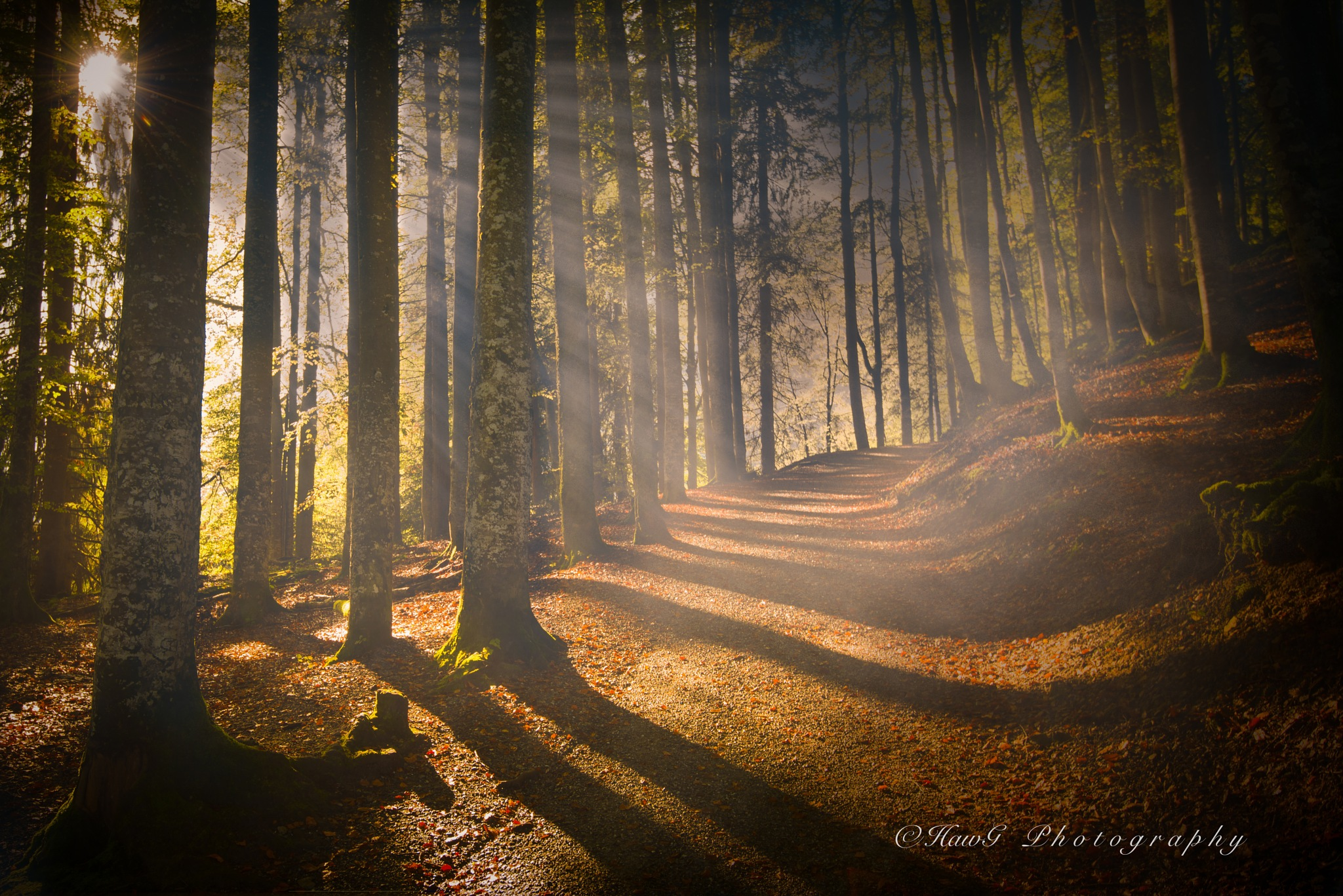 Good morning - Autumn by HawG-Photo