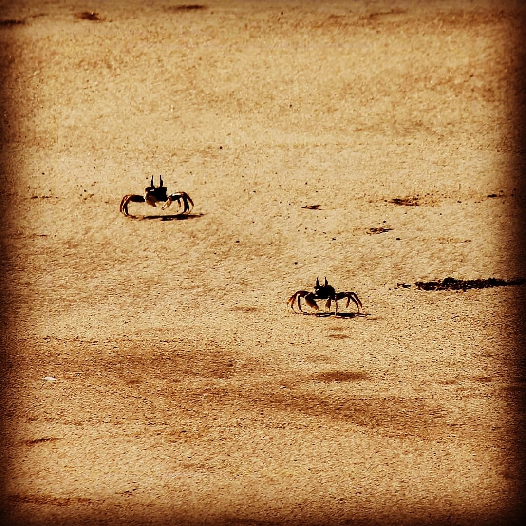 In the crab race by FreeSoul by Raksha