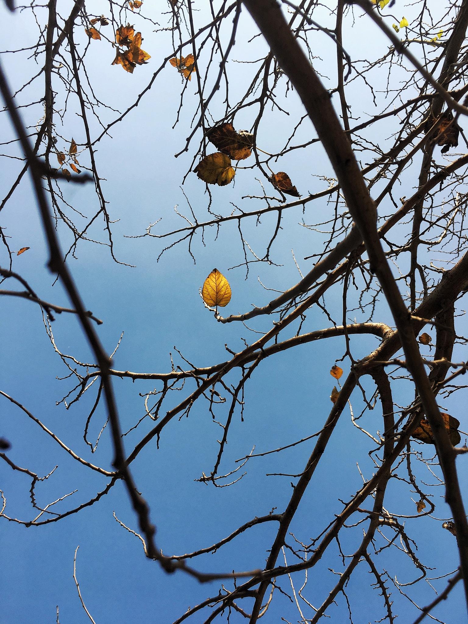 Gold leaf by Bhavya Jain
