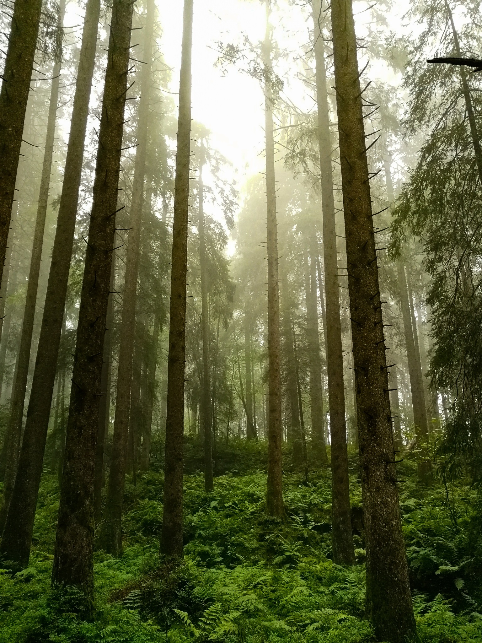 A foggy day in the forest  by Noah Dustin
