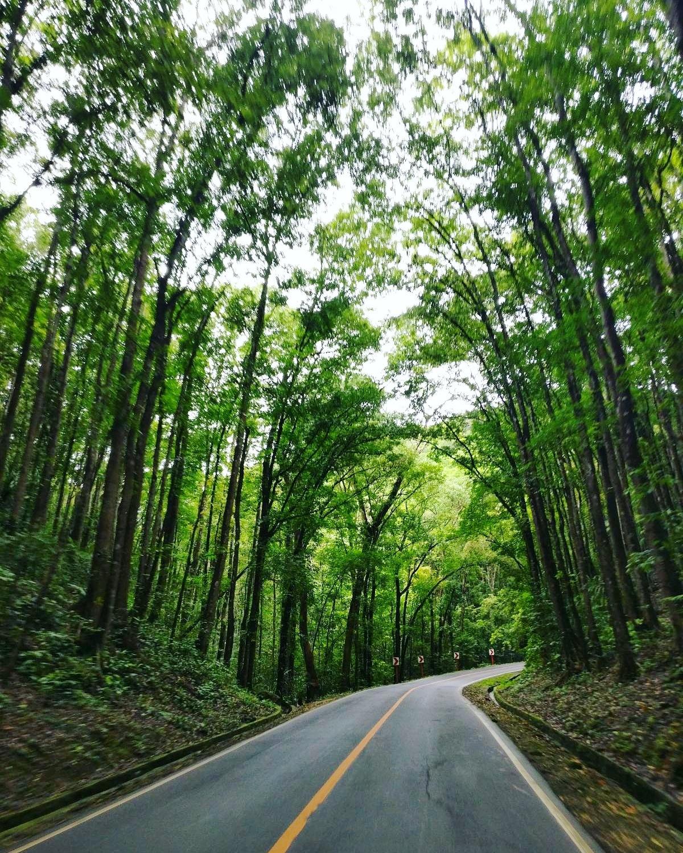 Forest road by Heidi Myllylä