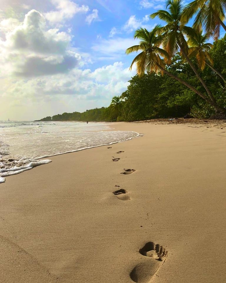 Salines, Martinique by Coulize972