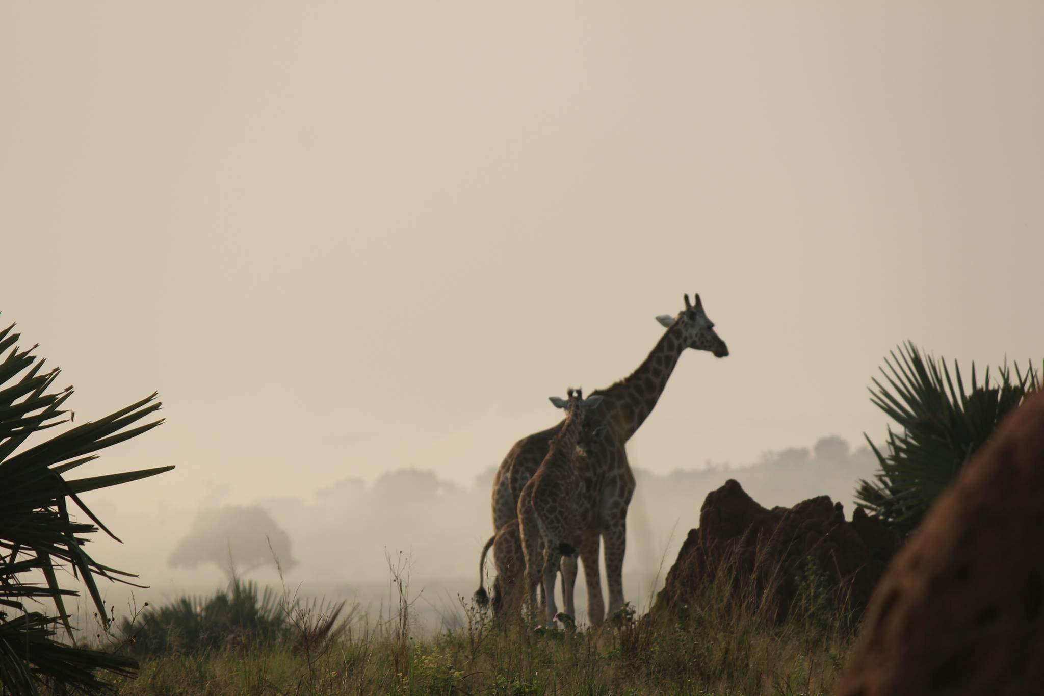 Early mornings by Rowan Stroop