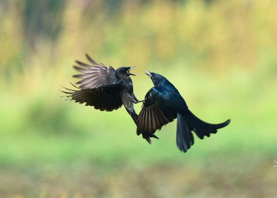 Aerial combat by SouravGhosh3