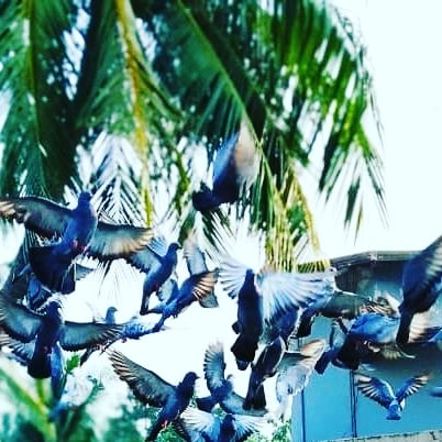 nature's splendid by Ashutosh Das
