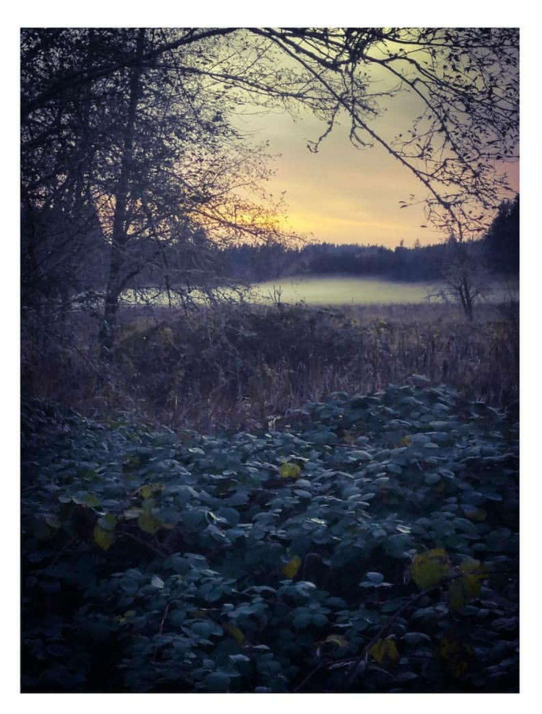 Rolling fog by April Langford