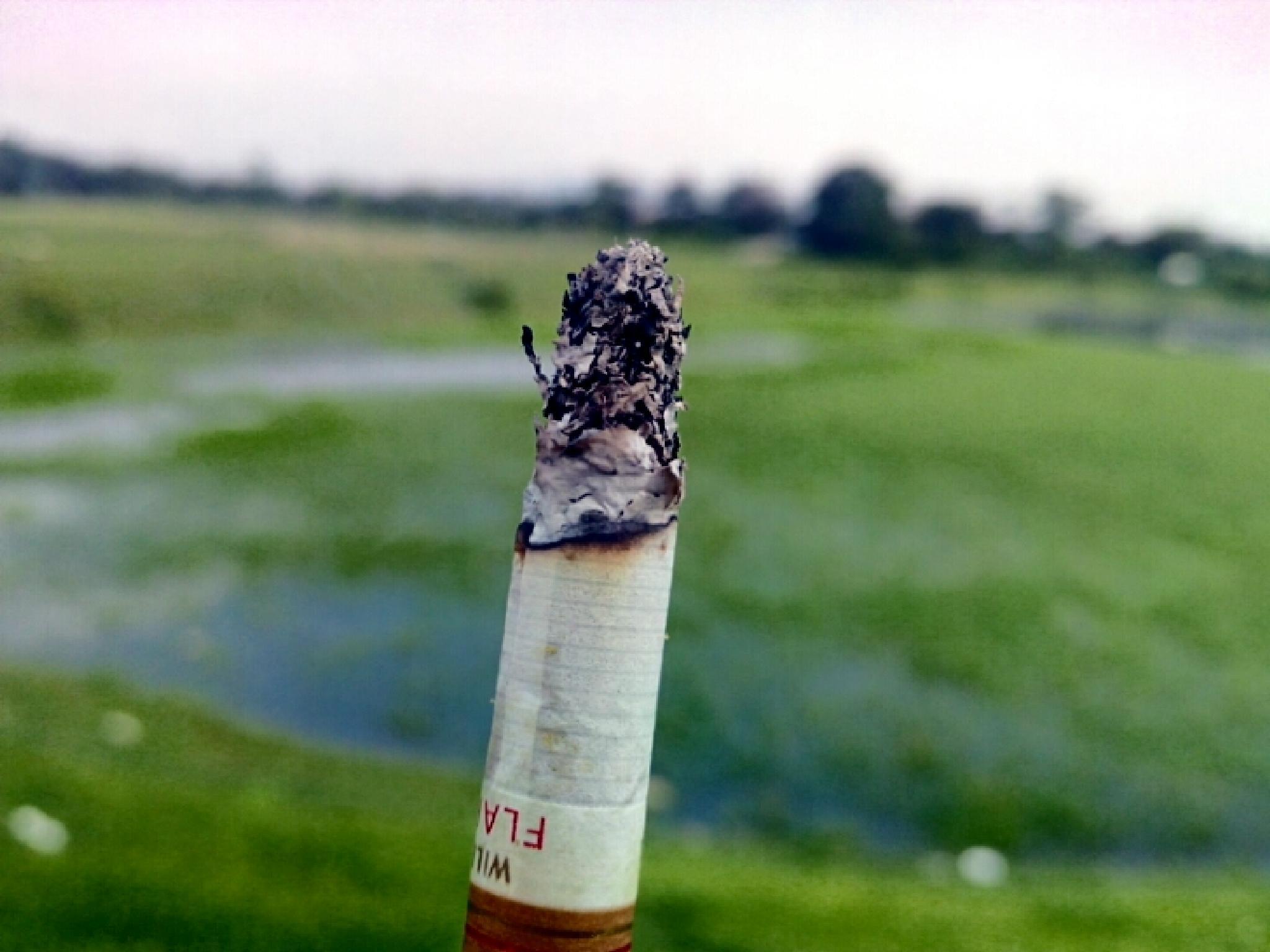 cigarette by ansuma brahma