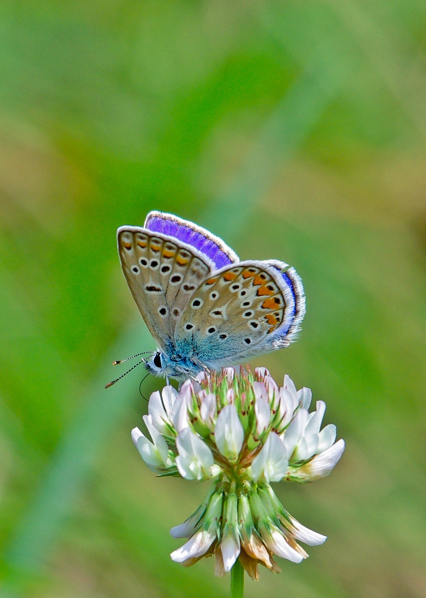 Butterfly IV by Zoran Rudec