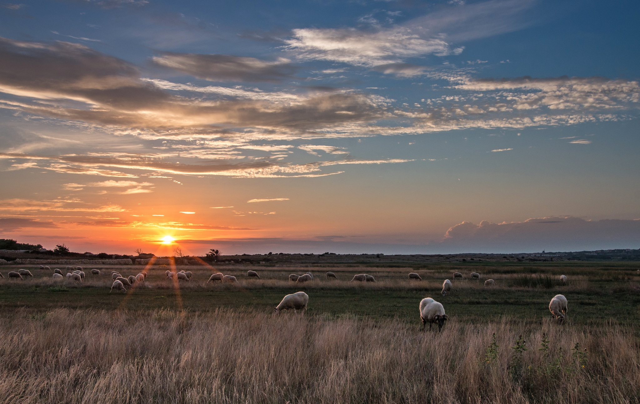 Sheep  at sunset by Zoran Rudec