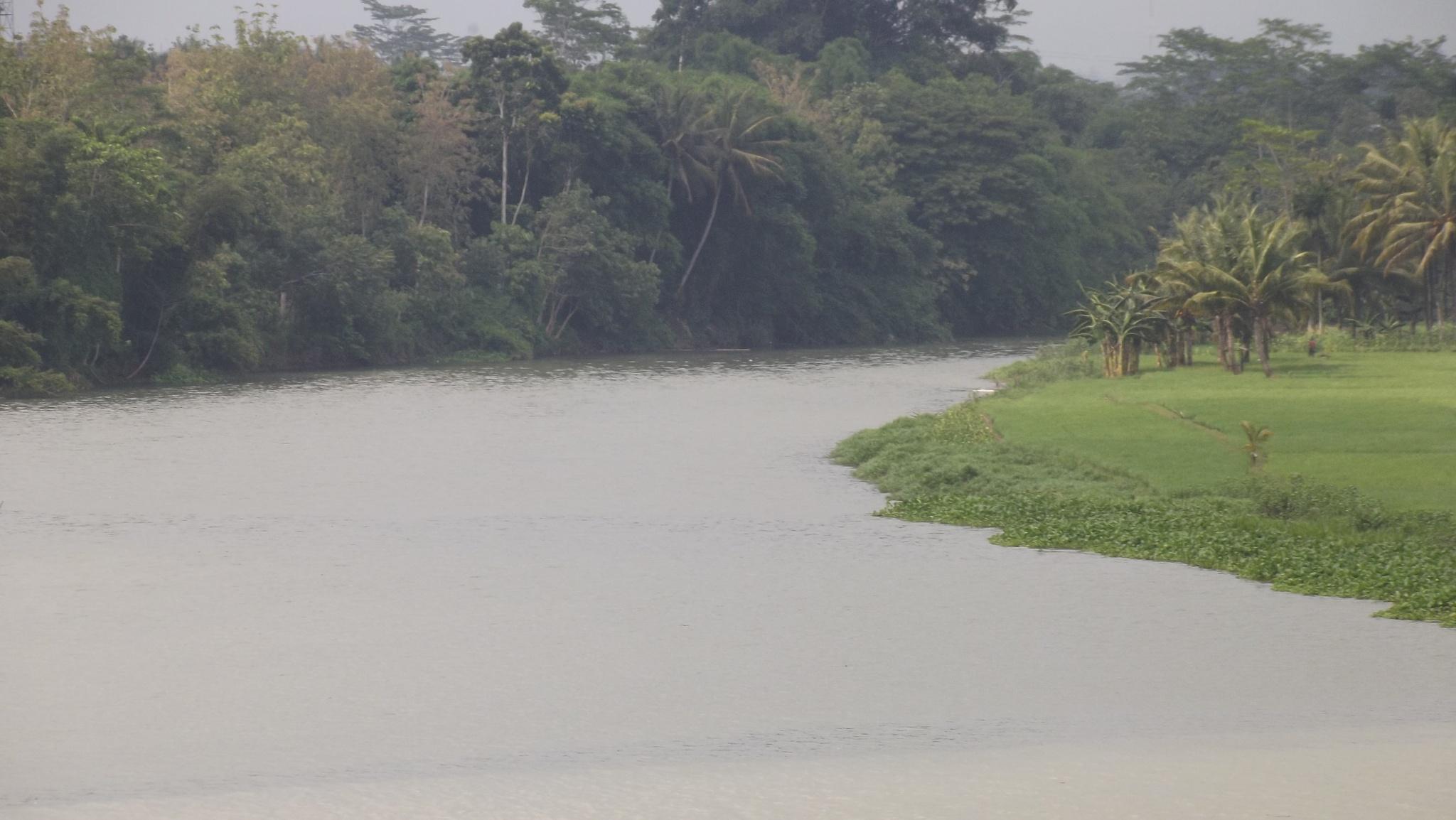 Wild river by Sari Handayani