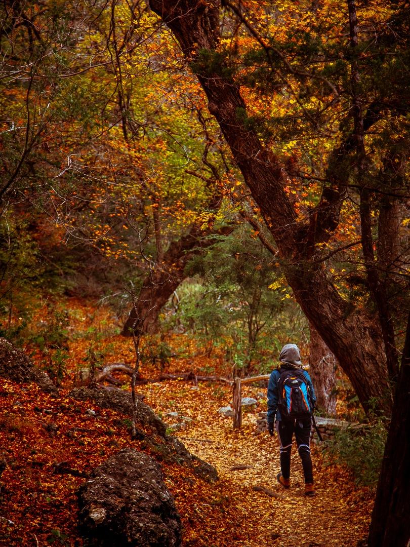 Lost Maples by Rare Estrella