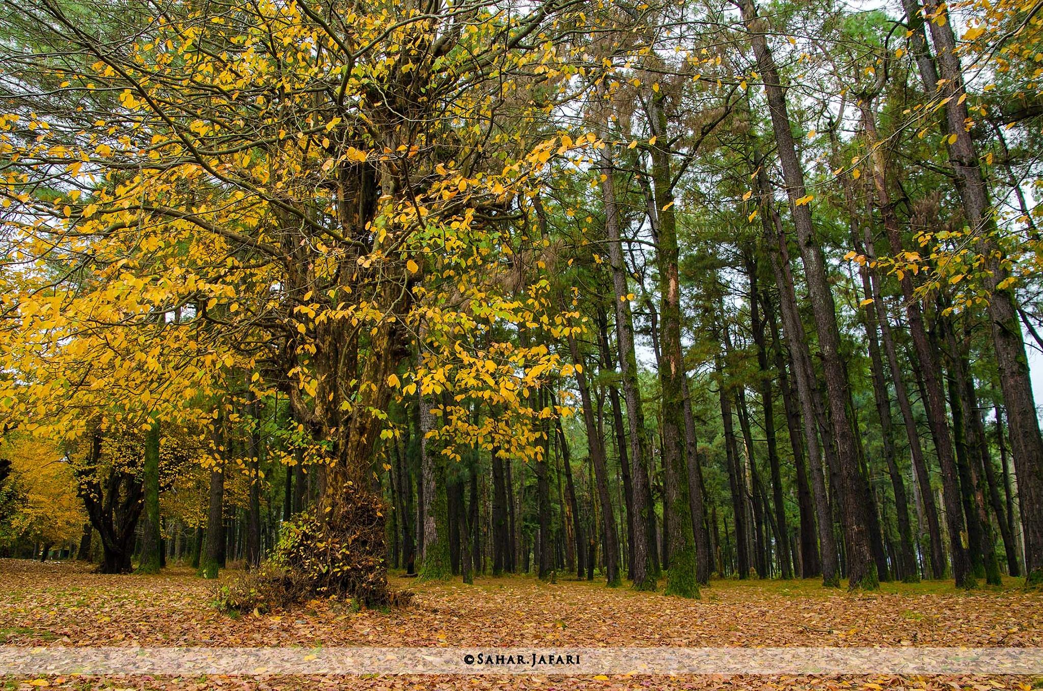 Autumn by Sahar.Jafari