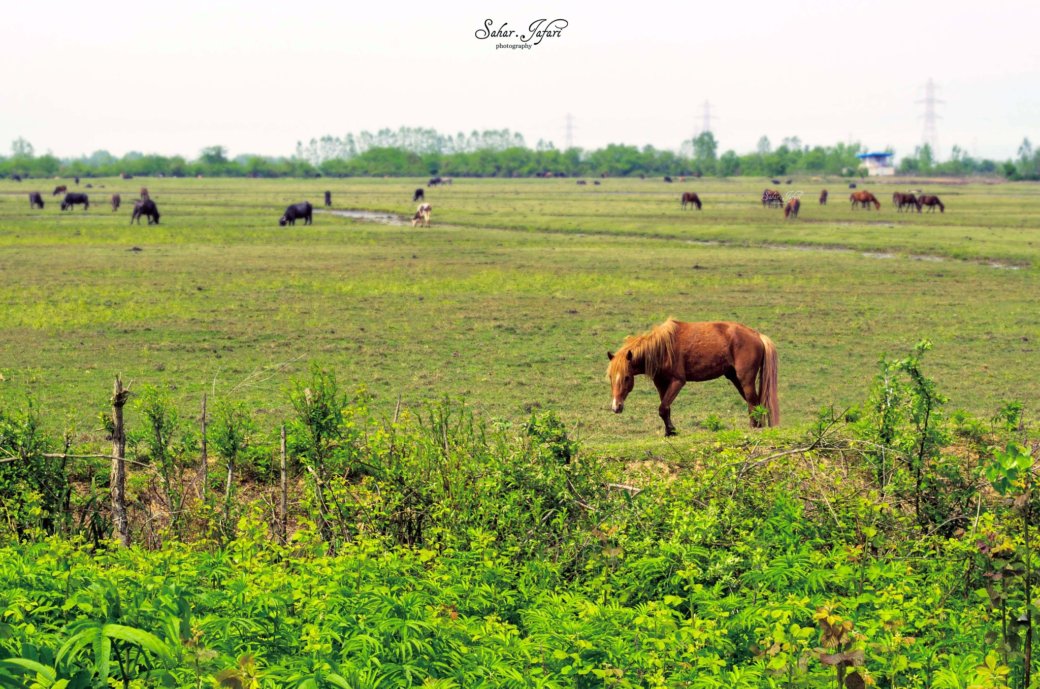Pasture by Sahar.Jafari